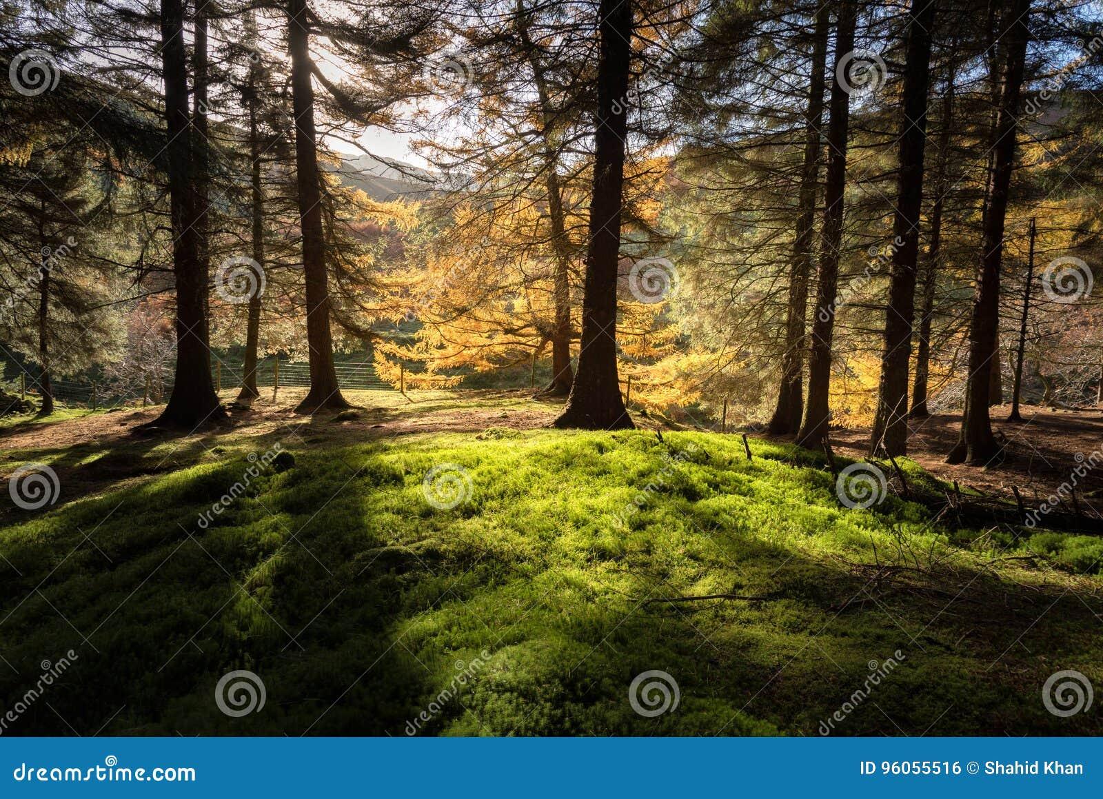 Autumn Peak Districts England