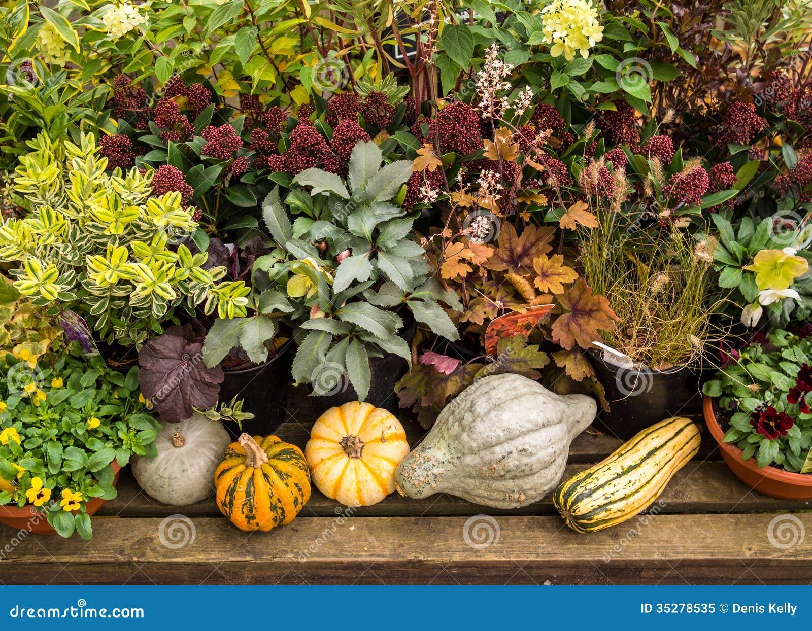 Autumn Vegetable Plants Garden Royalty Free Stock Photo Image 35278535