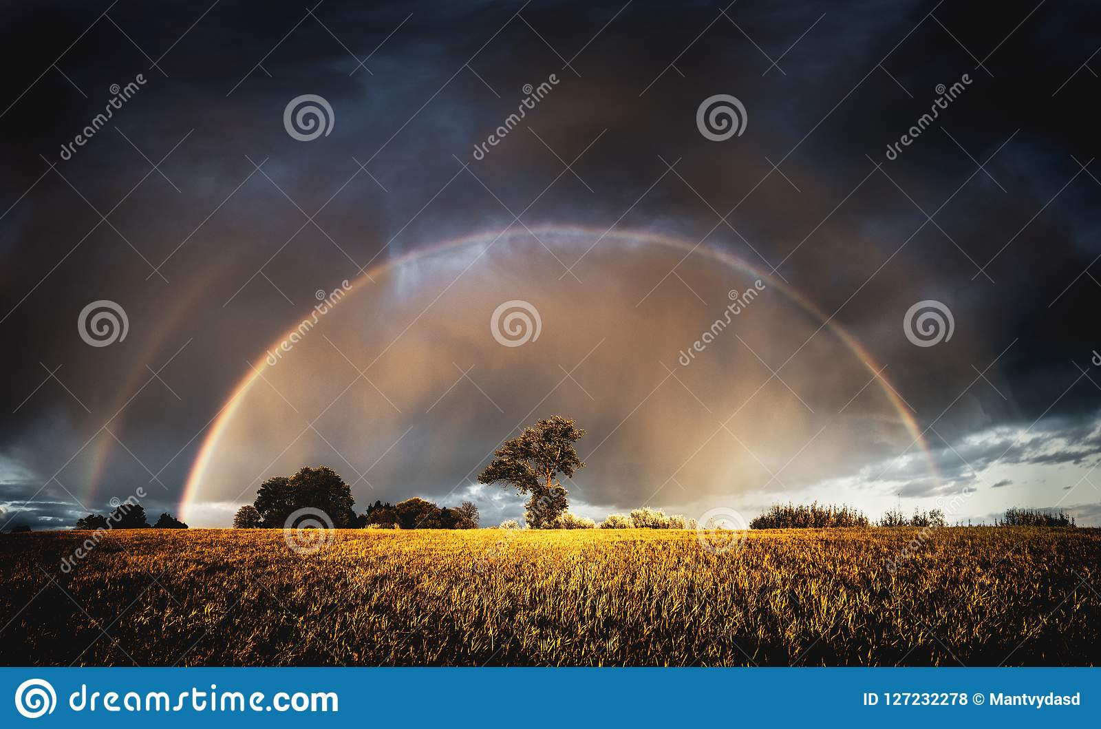 Autumn rain in the evening and full rainbow in the fields above trees