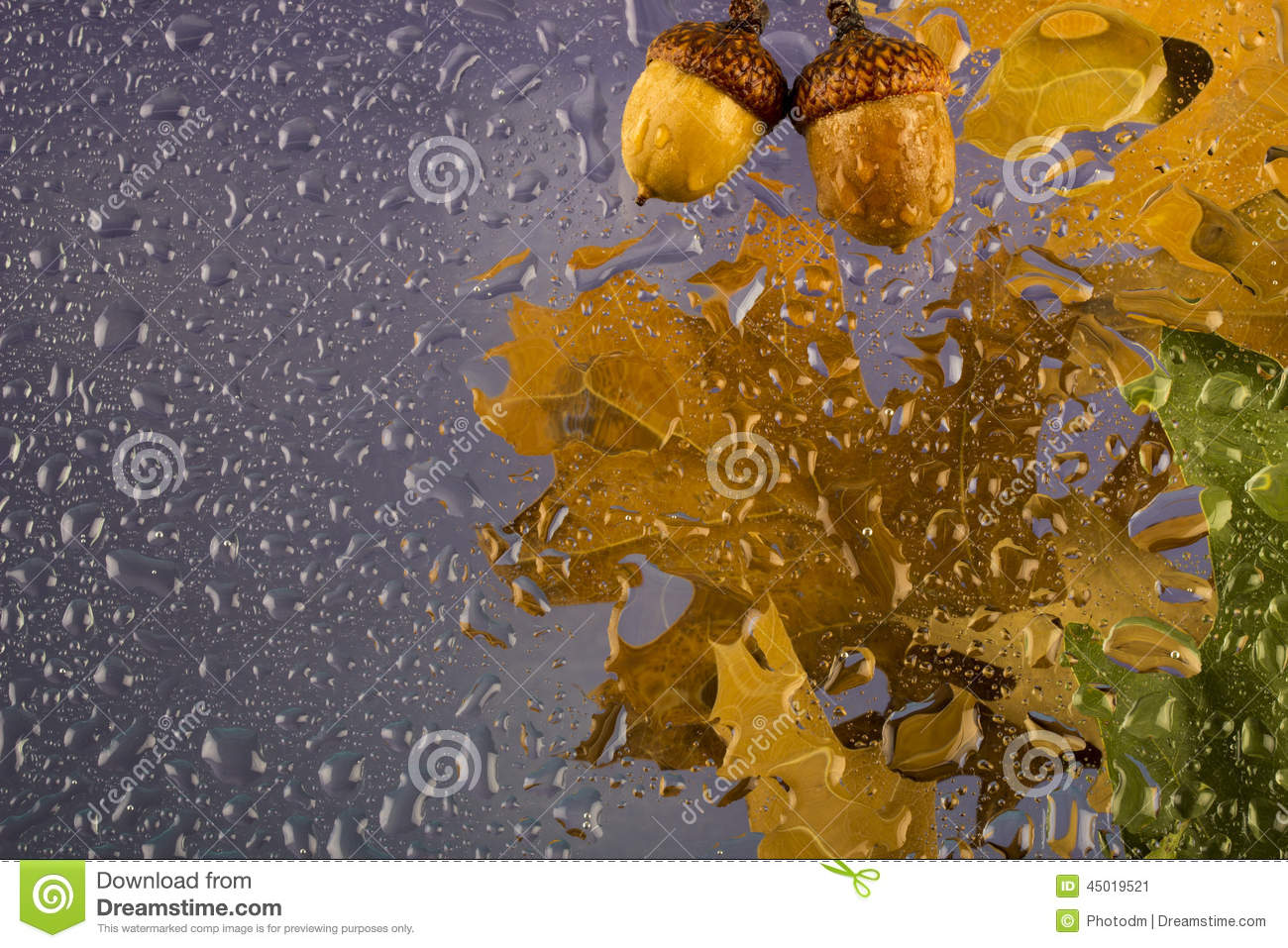 Autumn Rainy Cloudy Day With Dry Leaves And Acorns Drops
