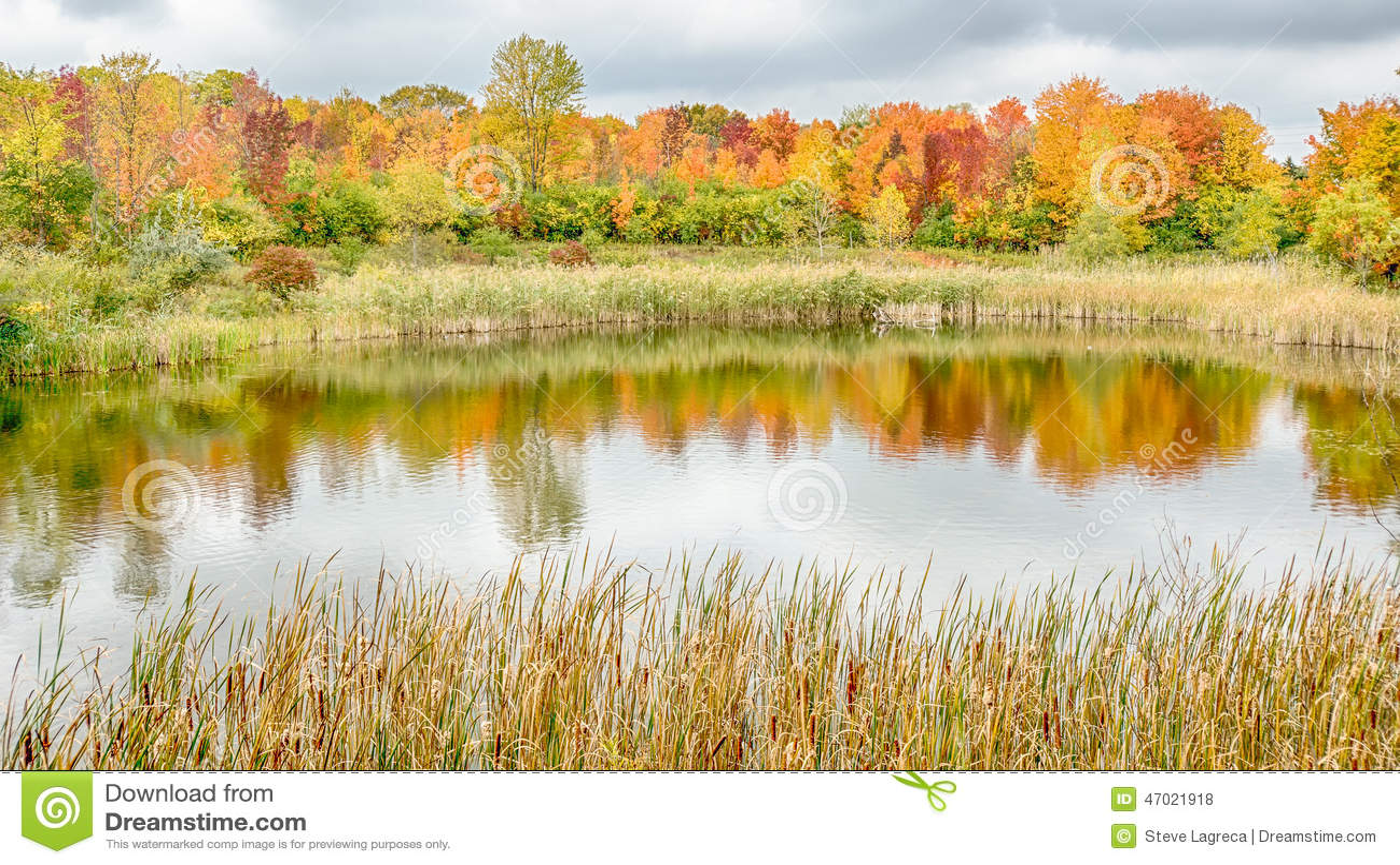 Woodland hills nature park