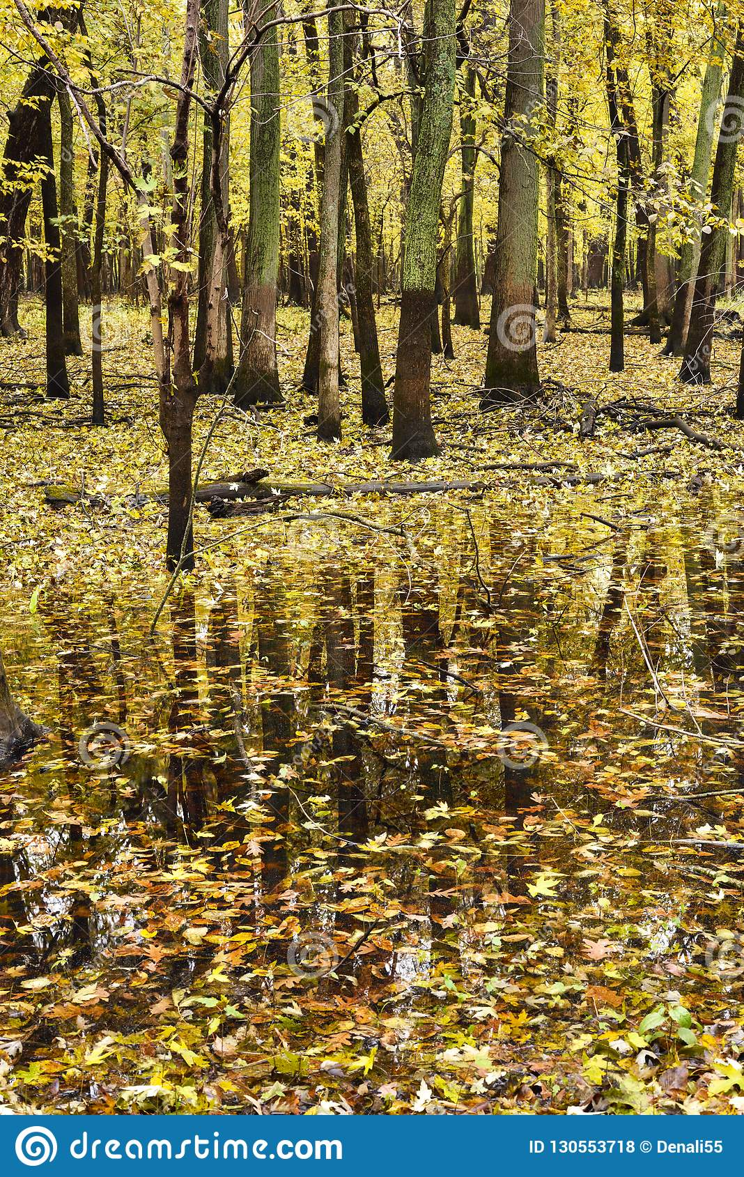 Autumn Reflections In Forest  Stock Photo - Image of changing, late
