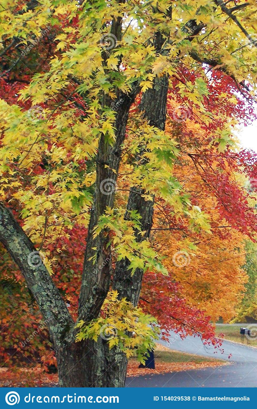 Autumn Road en Knoxville Tennessee