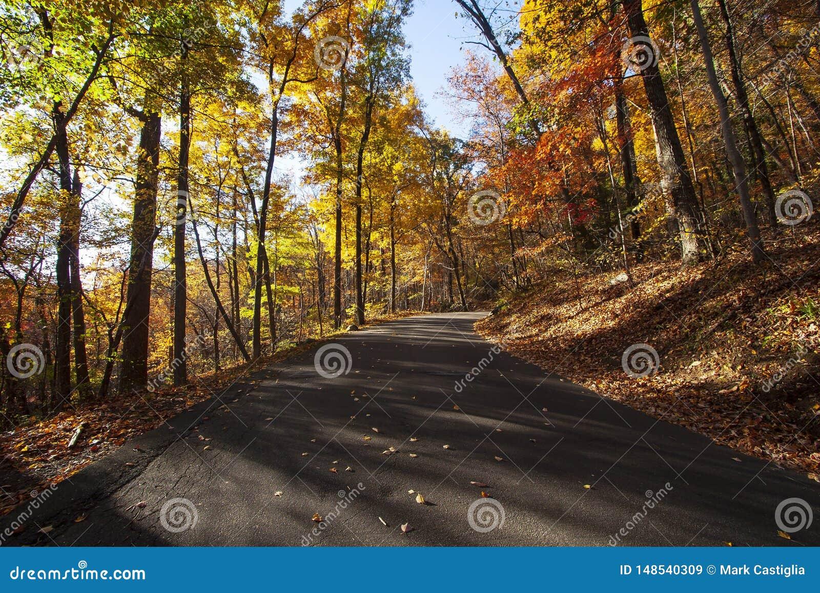 Autumn Road met overweldigende kleur en laag hoekig zonlicht