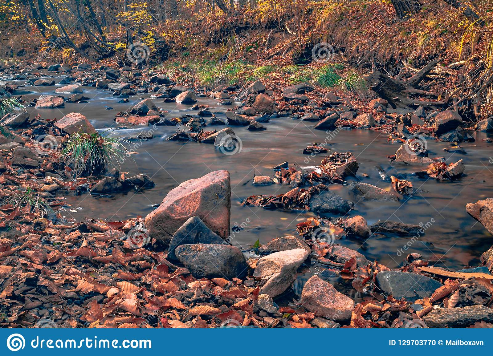 Autumn in the Russian forest. Far Eastern river.