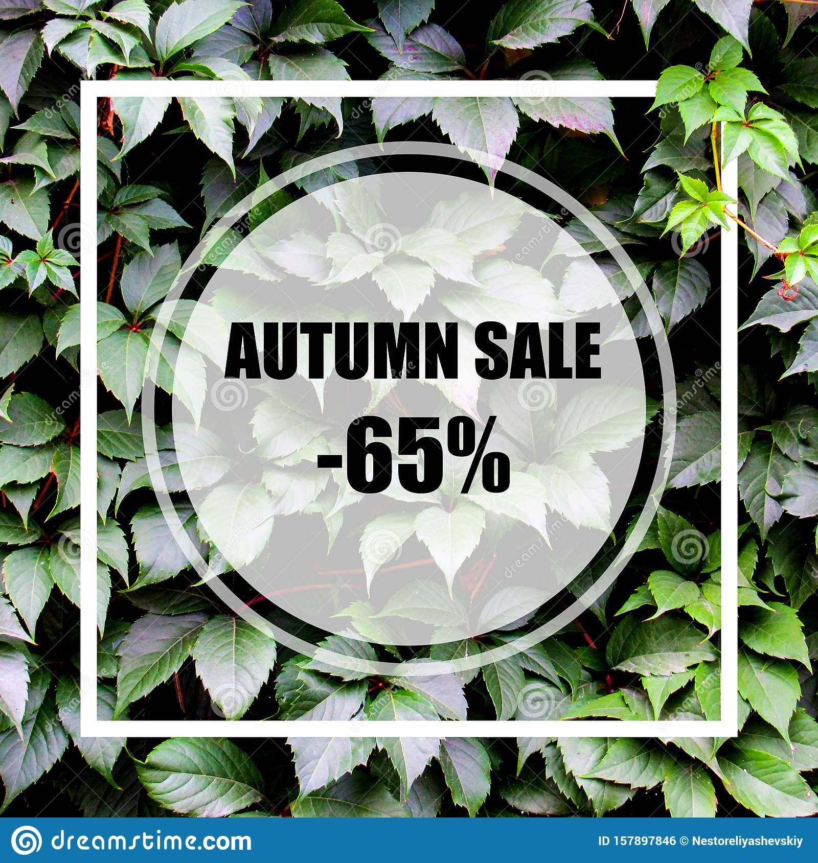 Autumn Sale -65 . Creative layout made with green leaves background, square frame. This is a blank for advertising card.