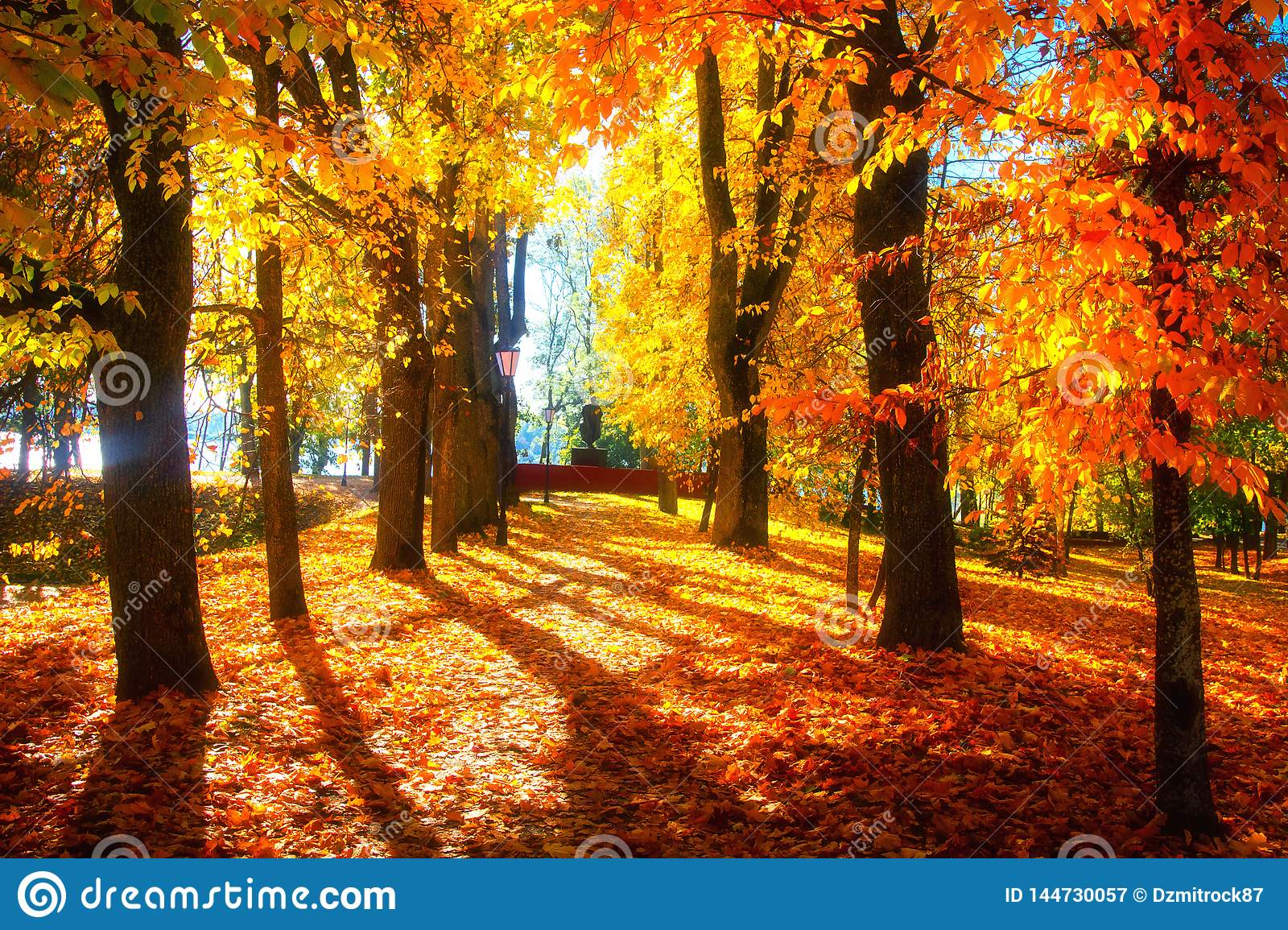 786 918 Autumn Trees Photos Free Royalty Free Stock Photos From Dreamstime