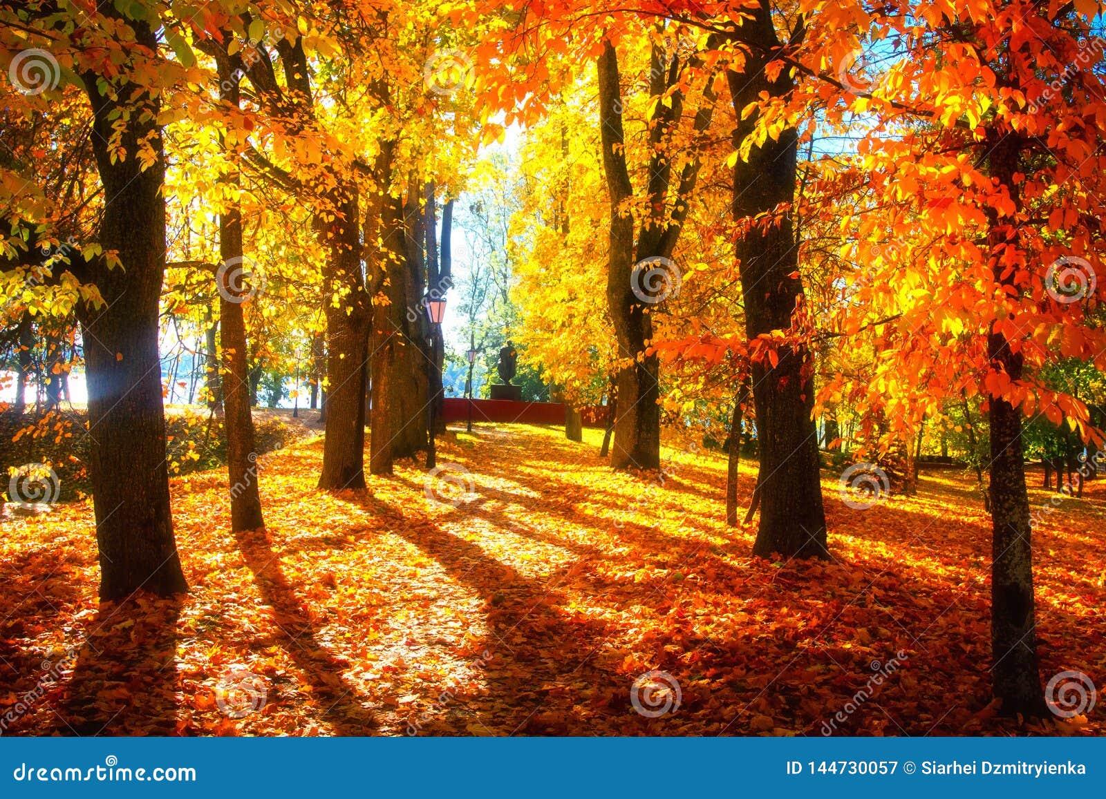 Autumn Scene. Bright Colorful Landscape Yellow Trees In ...