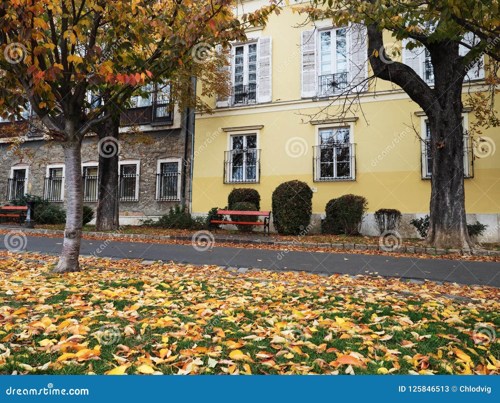 Autumn Scene met Dalingsbladeren