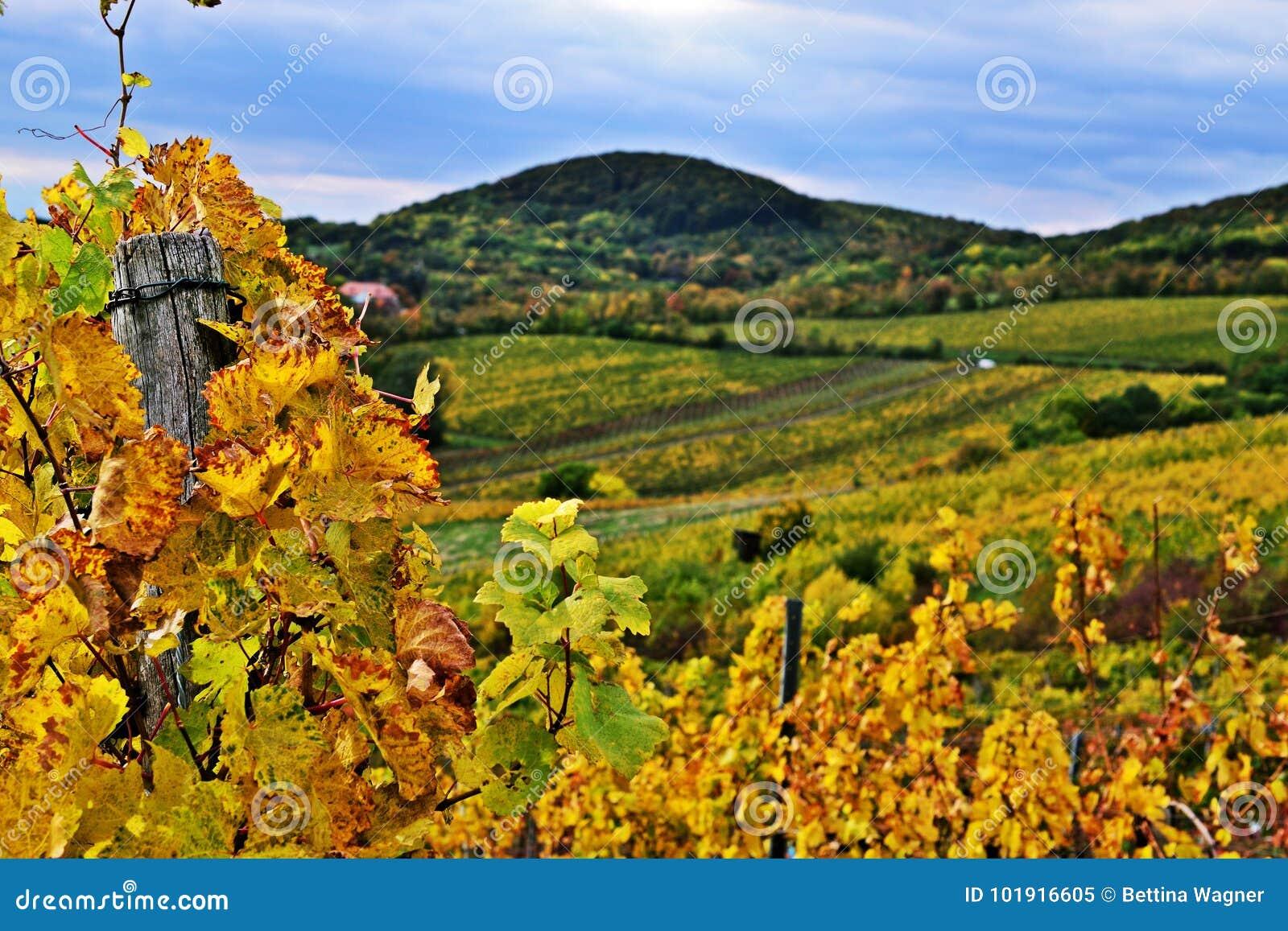 Vineyards Of Kahlenberg Wien Stock Image Image Of Clouds Hills
