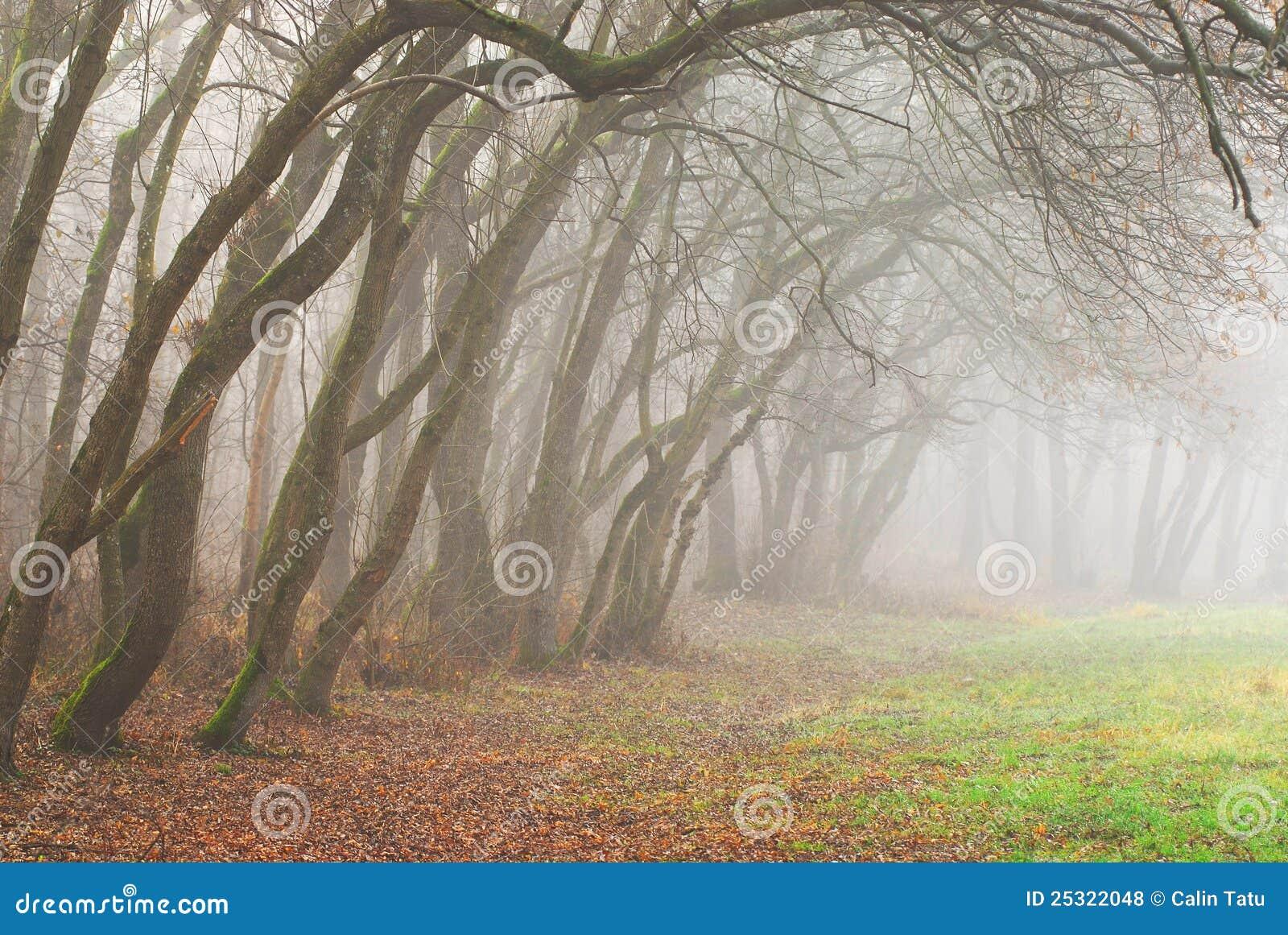 Autumn scenery in the forest with morning fog stock photo for Disegni di paesaggi colorati
