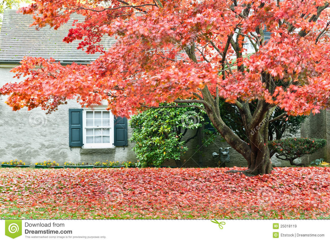 autumn season family house with front yard stock image