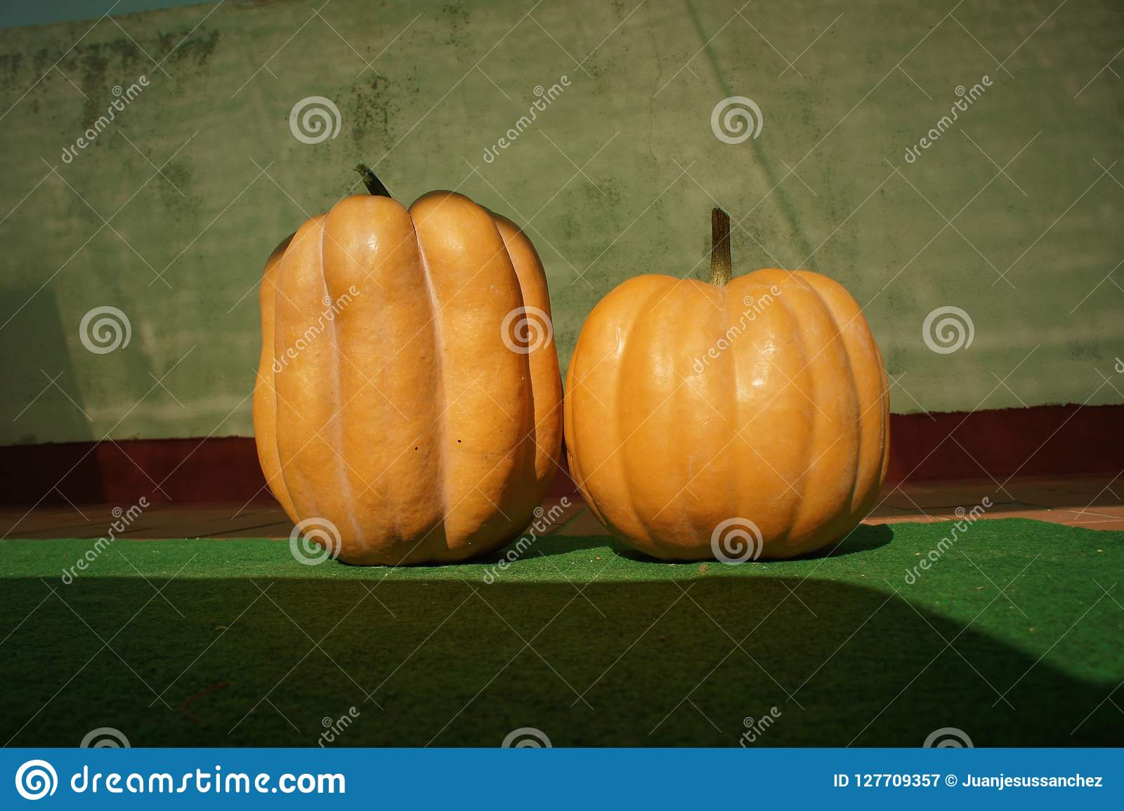 Autumn Season Pumpkin For Halloween Stock Image , Image of
