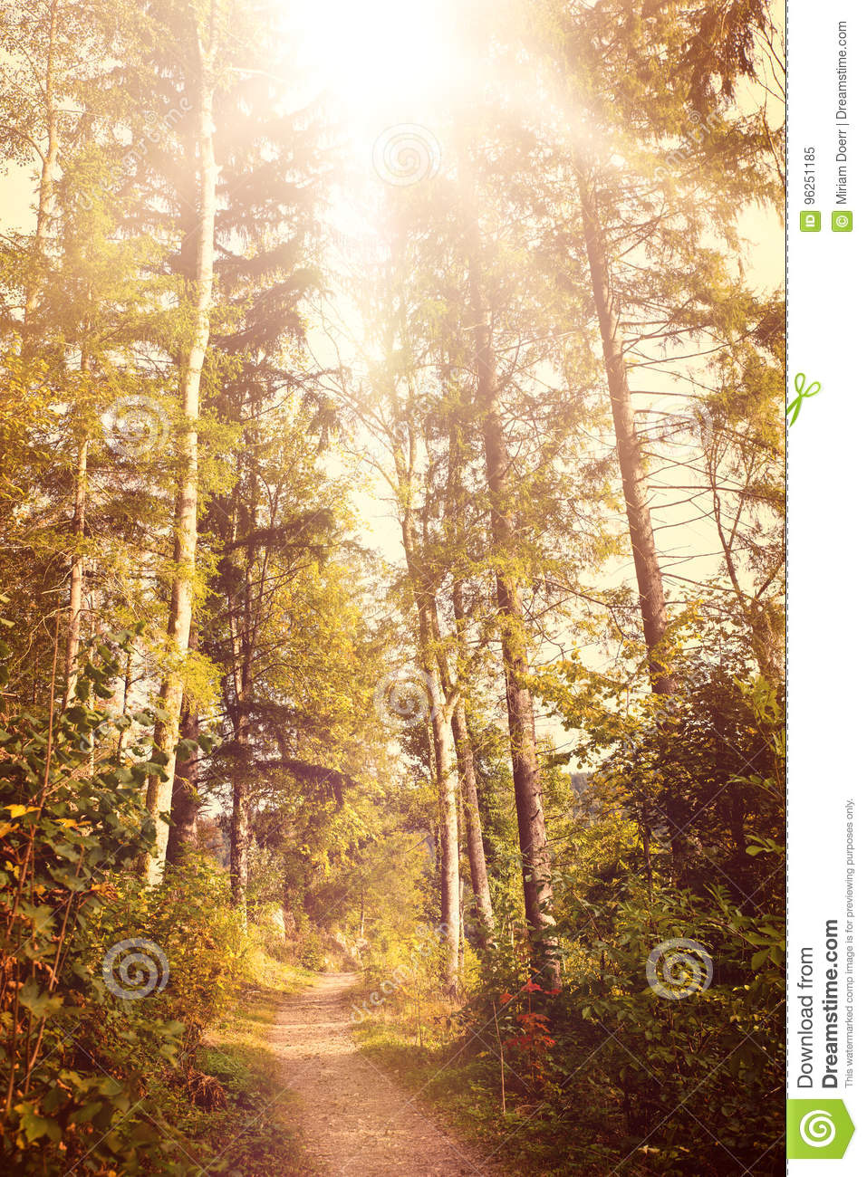 Autumn Season Wallpaper Trail In The Black Forest With