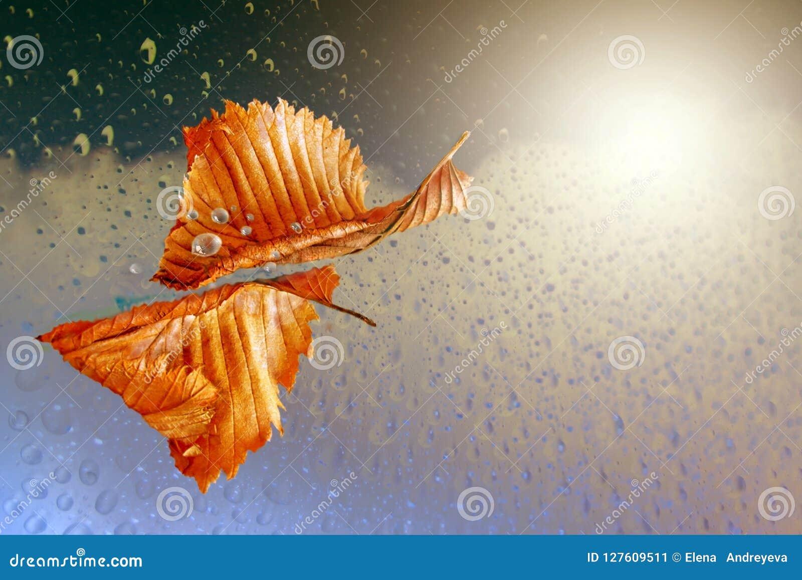 Autumn sheet tree flies in rain