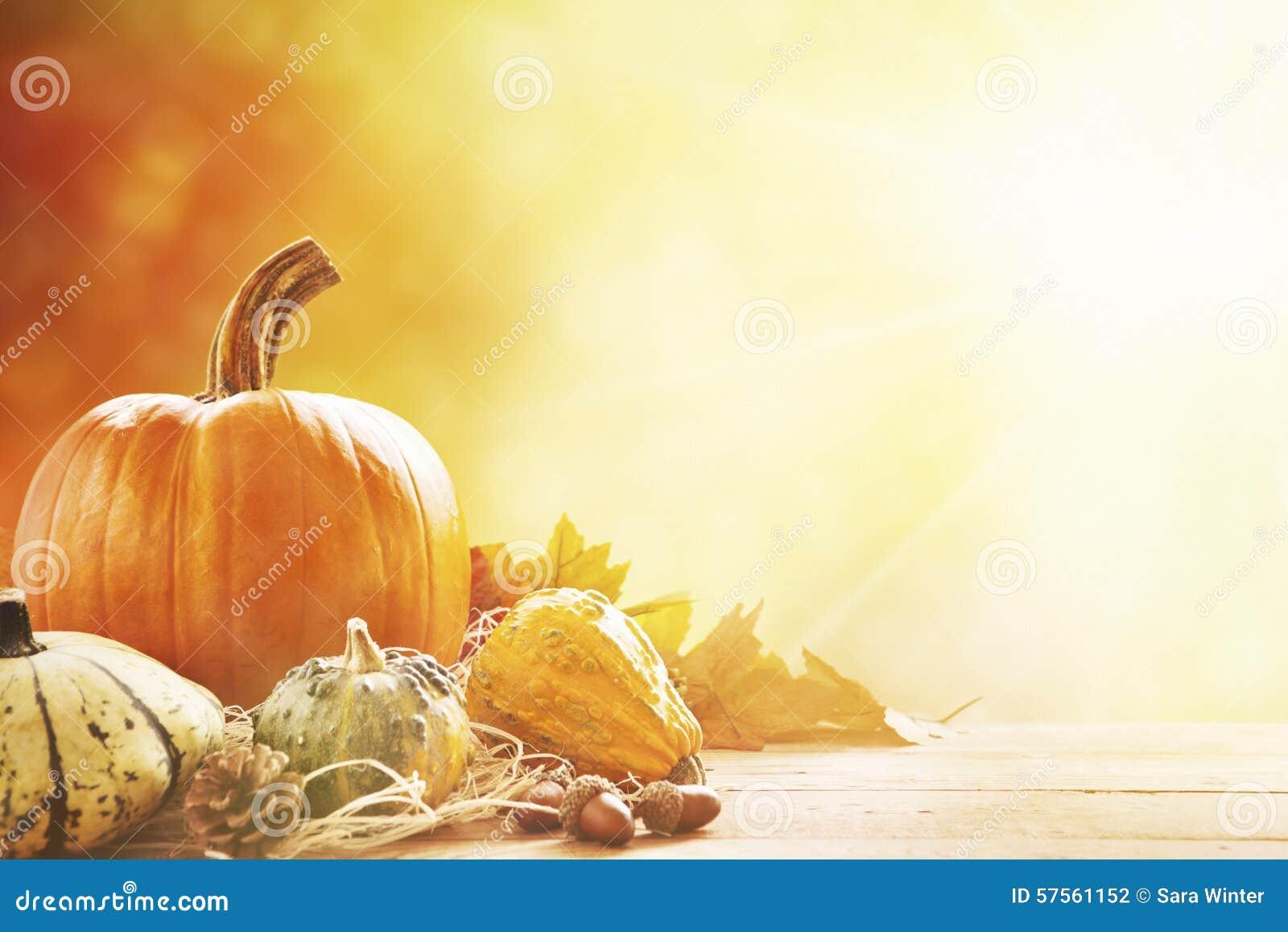 Autumn still life in bright sunlight