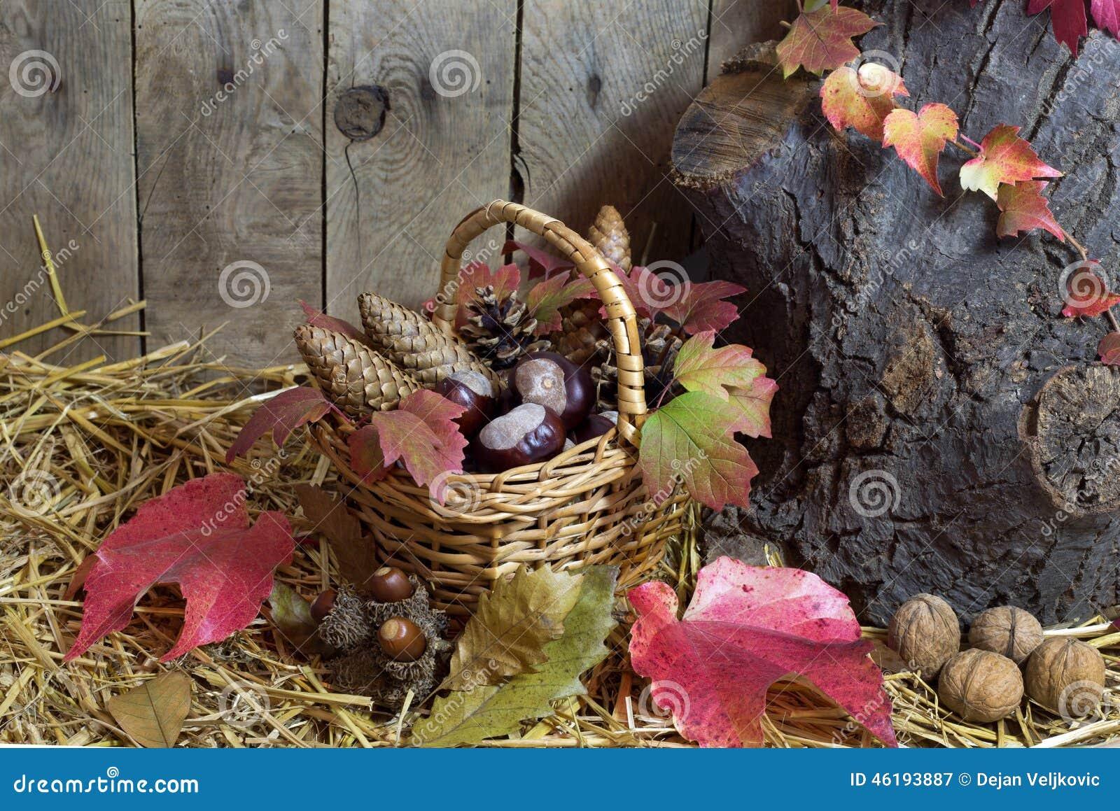 Autumn Still Life med den vide- korgen som fylls med, sörjer kottar, ekollonar, kastanjer, röda Autumn Leaves och muttrar på ett