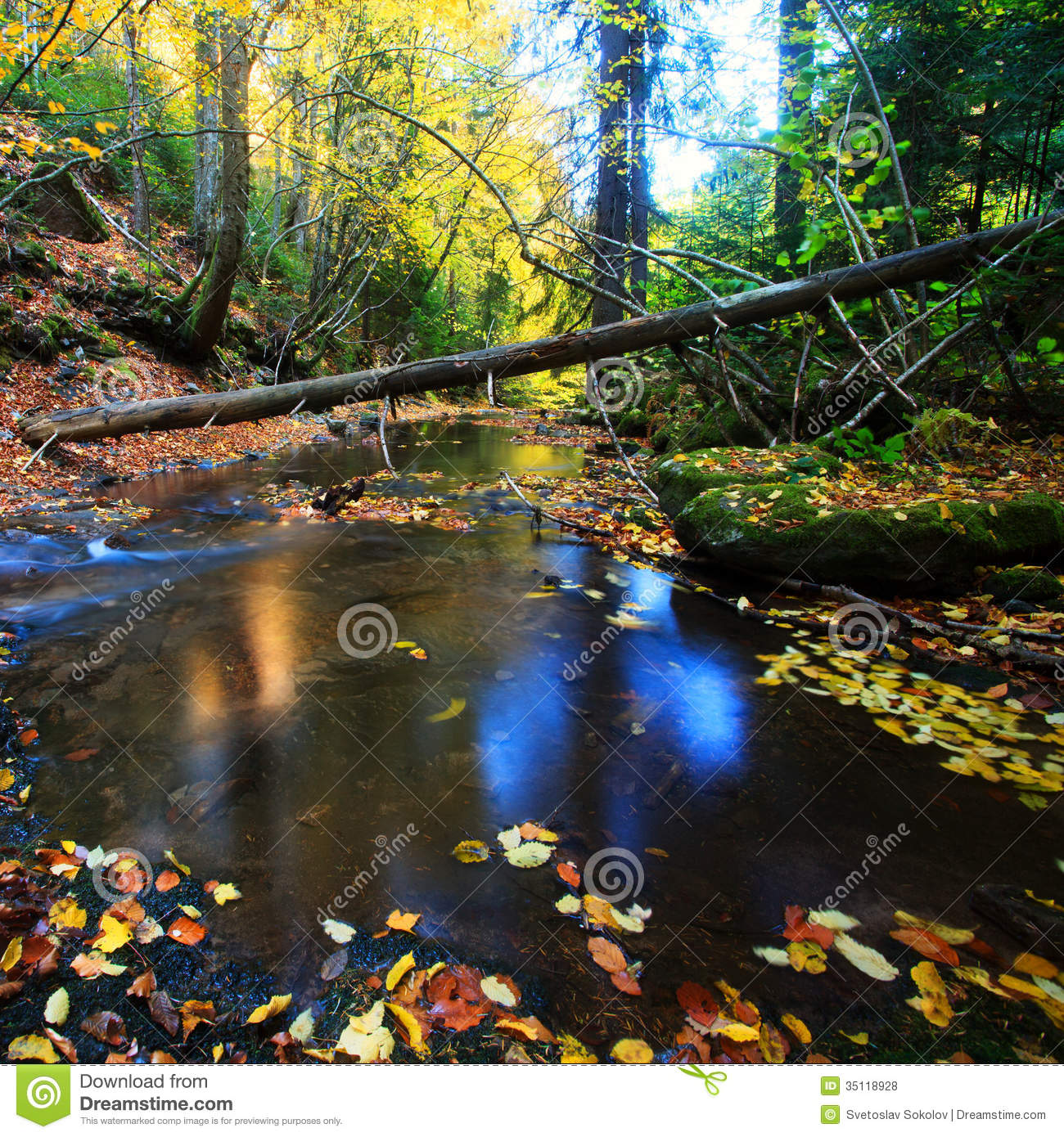 Autumn forest colorful stream details in bulgarian Rhodope mountain.