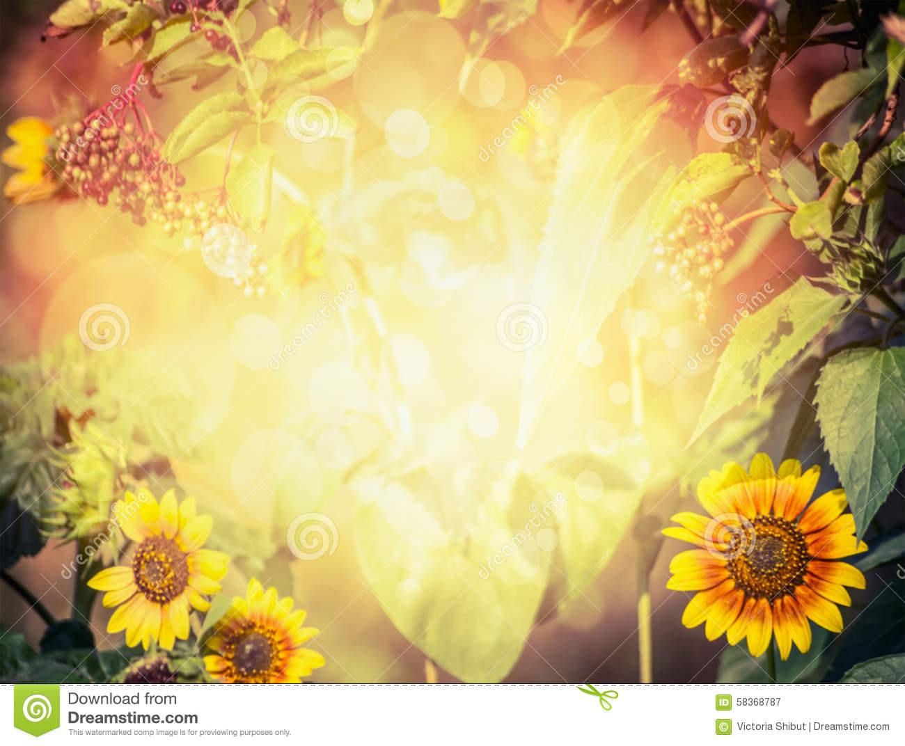Autumn or summer blurred nature background with sunflowers, leaves,elder and foliage with sunlight
