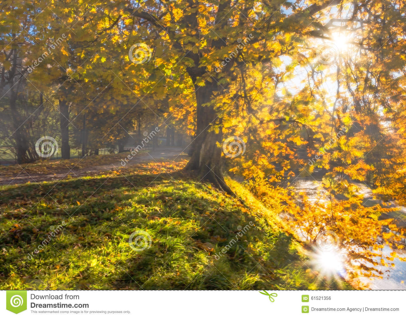 Download Autumn Sun In The Park, Photomanipulation Stock Photo - Image of background, beauty: 61521356