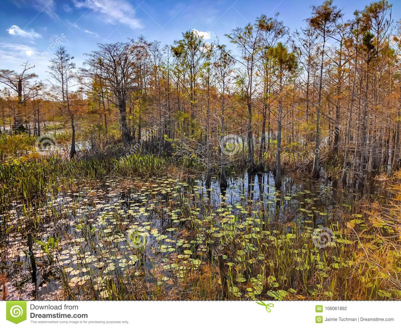 autumn in the swamp