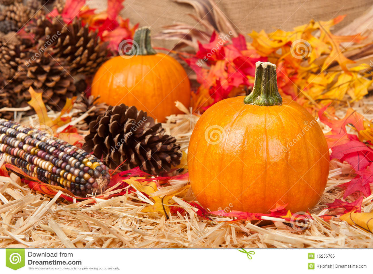 Pumpkins Fall Leaves Stock Photos, Images, & Pictures - 6,857 Images