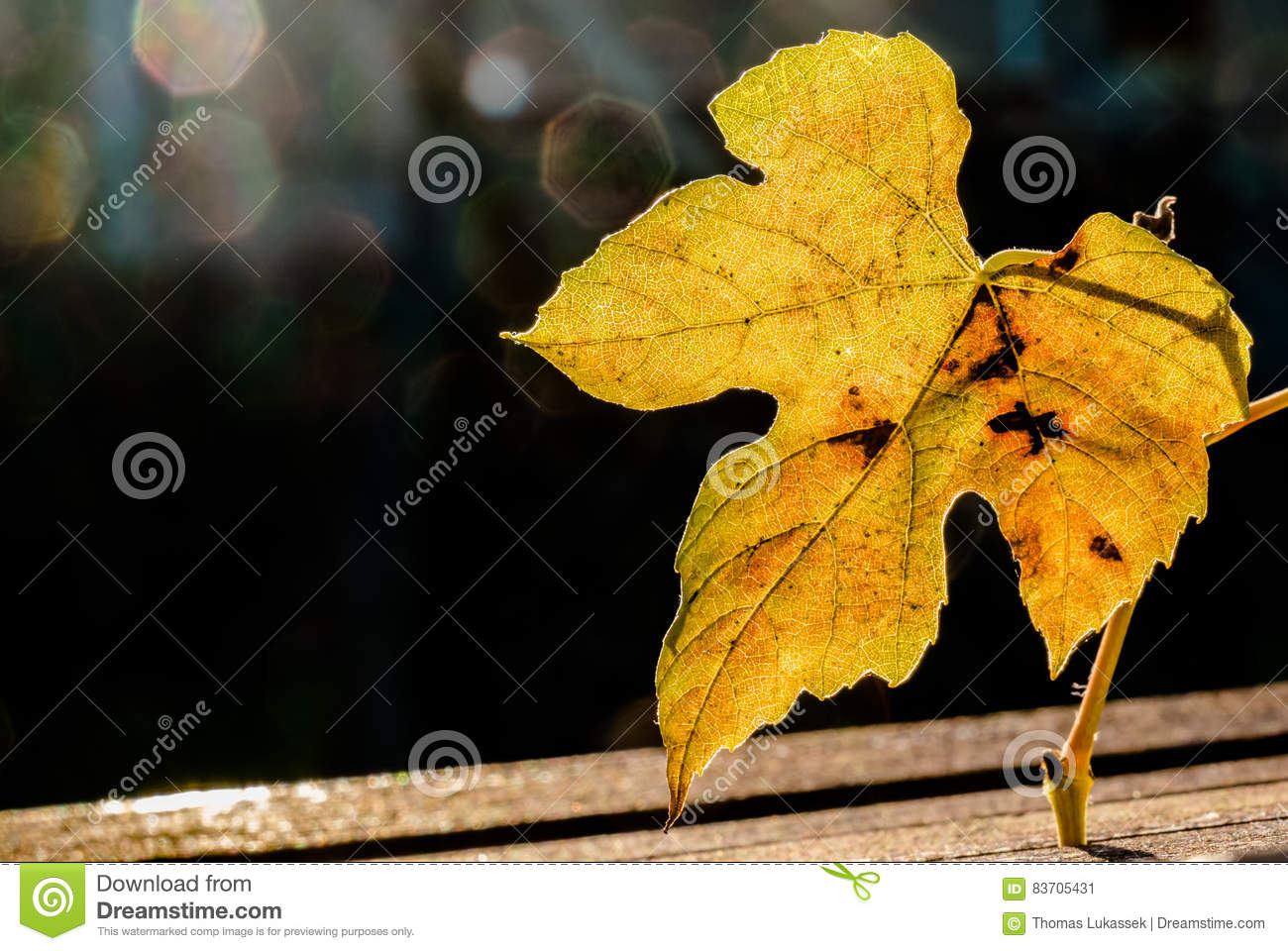 Autumn Time Of The Year Has Arrived Stock Photo