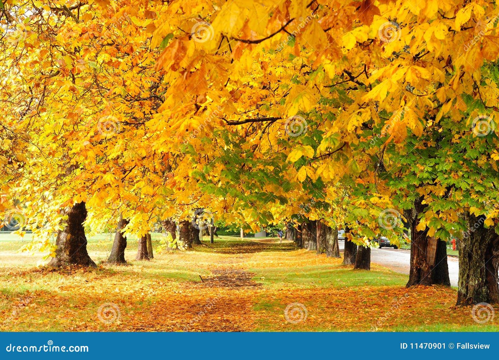 Autumn trail in park