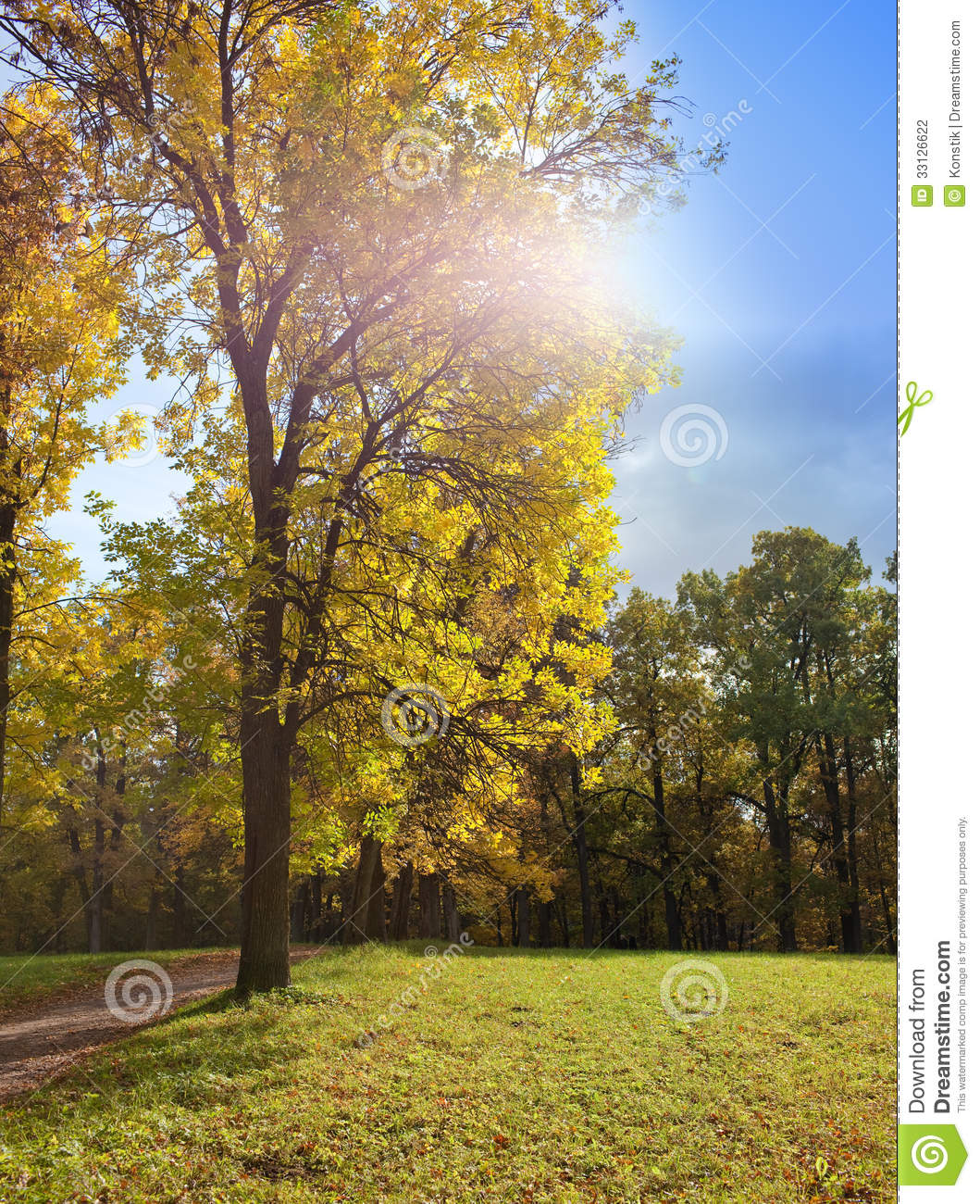 Autumn tree with bright foliage on a blue sky background for Sunny landscape designs