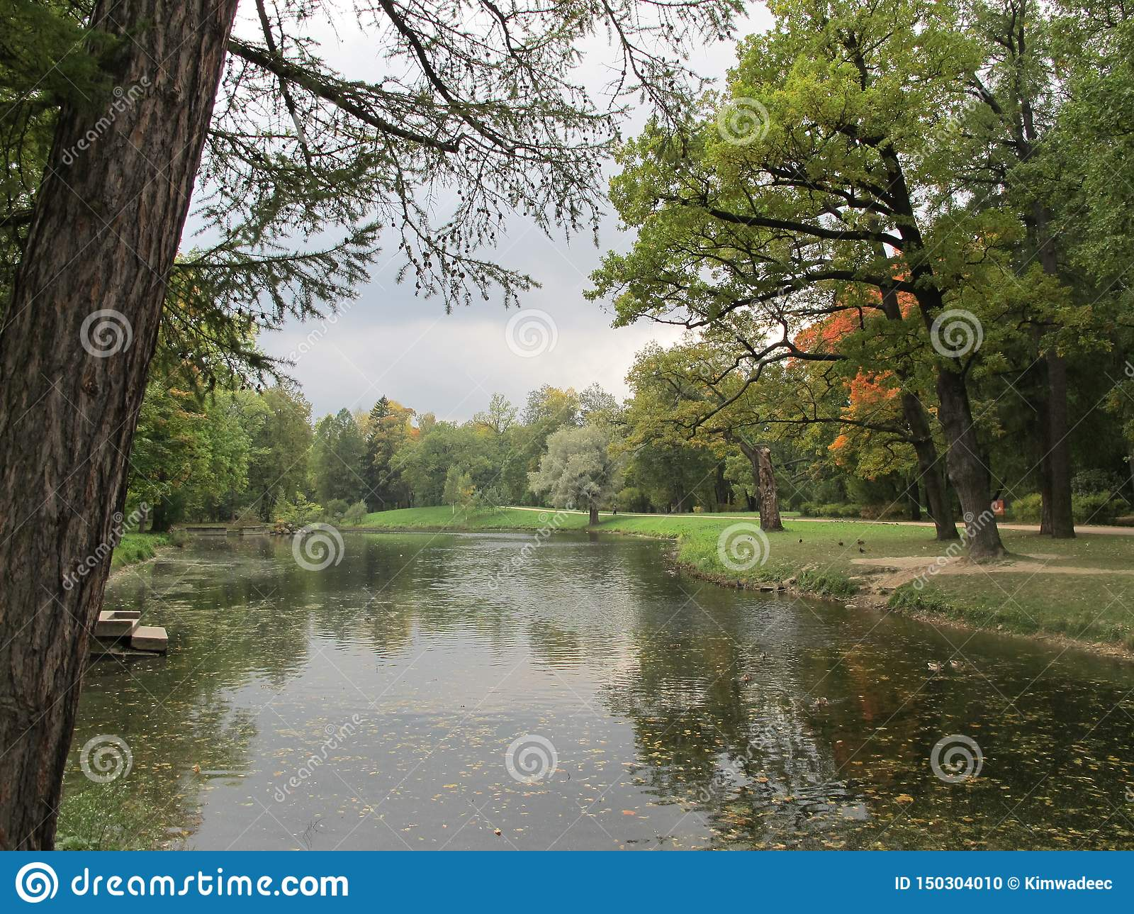 Autumn tree and lake in the park