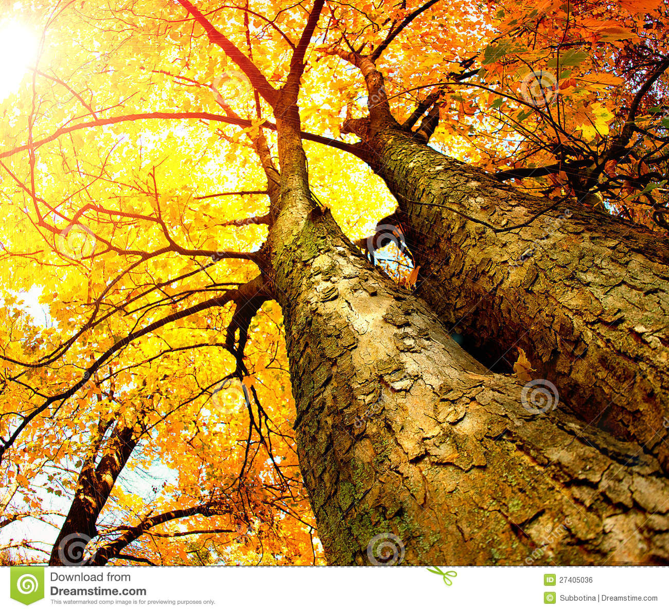 autumn trees stock photo image of forest autumn environment