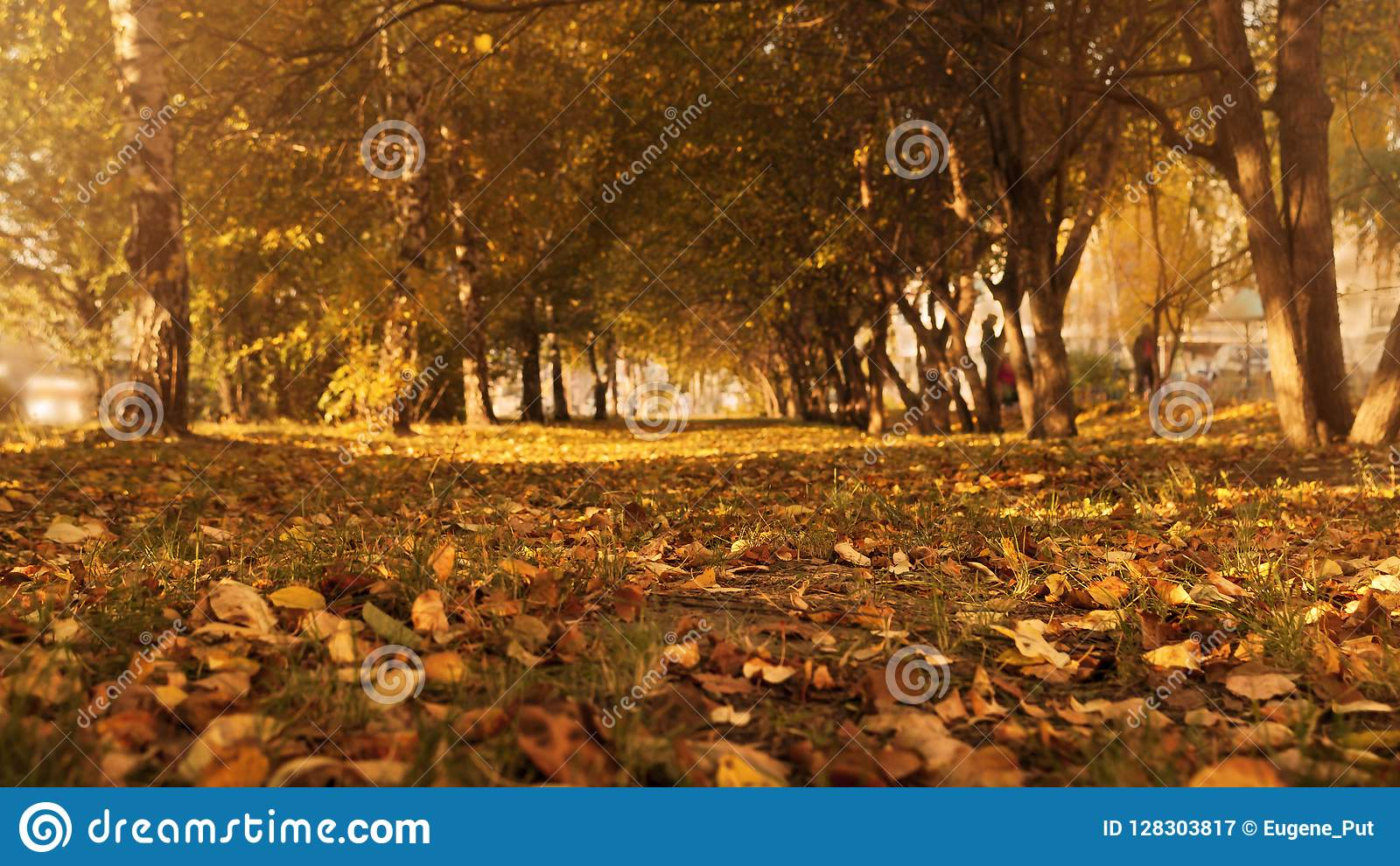 Autumn Trees, Colorful Fall Foliage. City Park Alley.