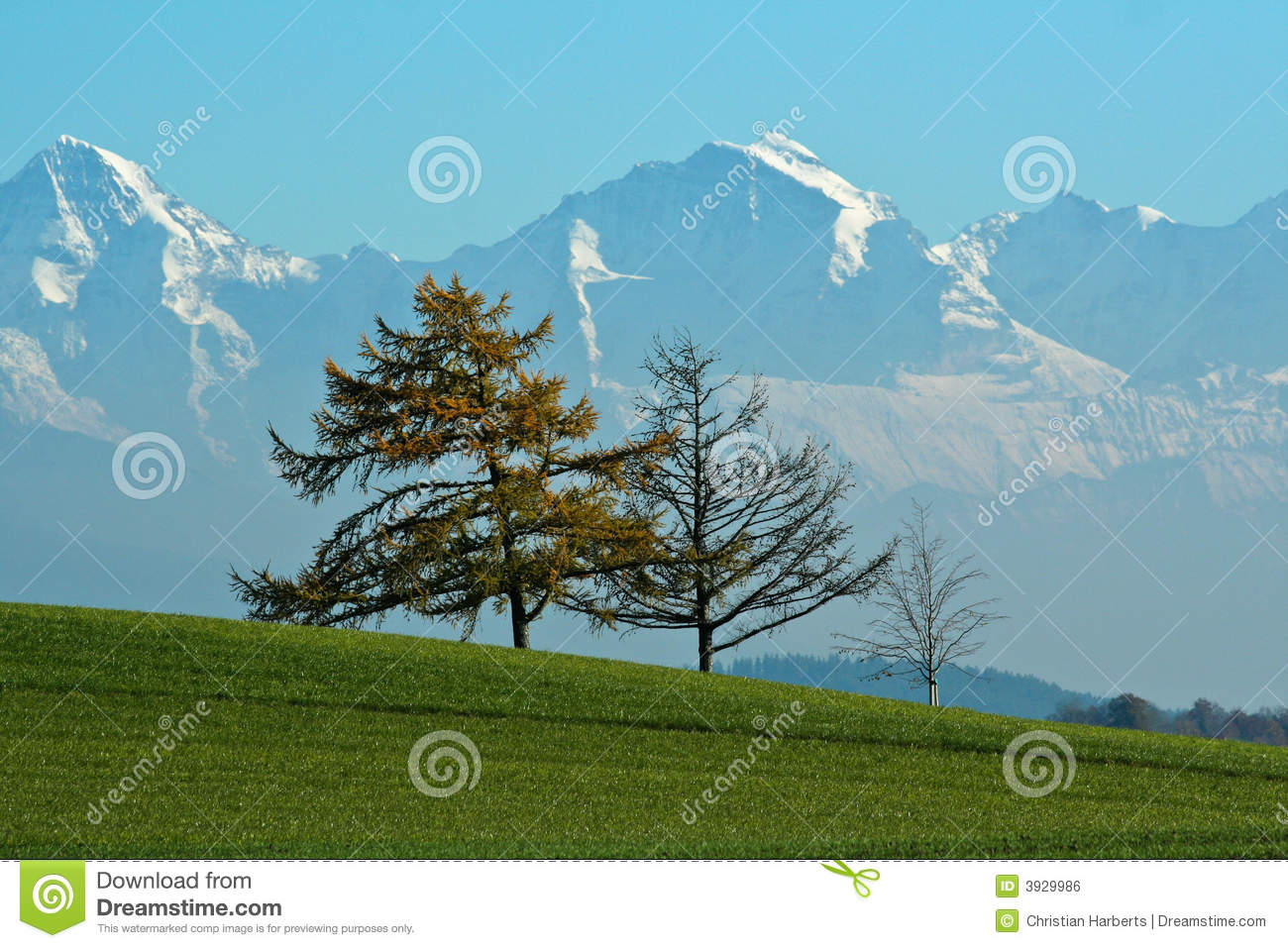 Autumn trees mountains
