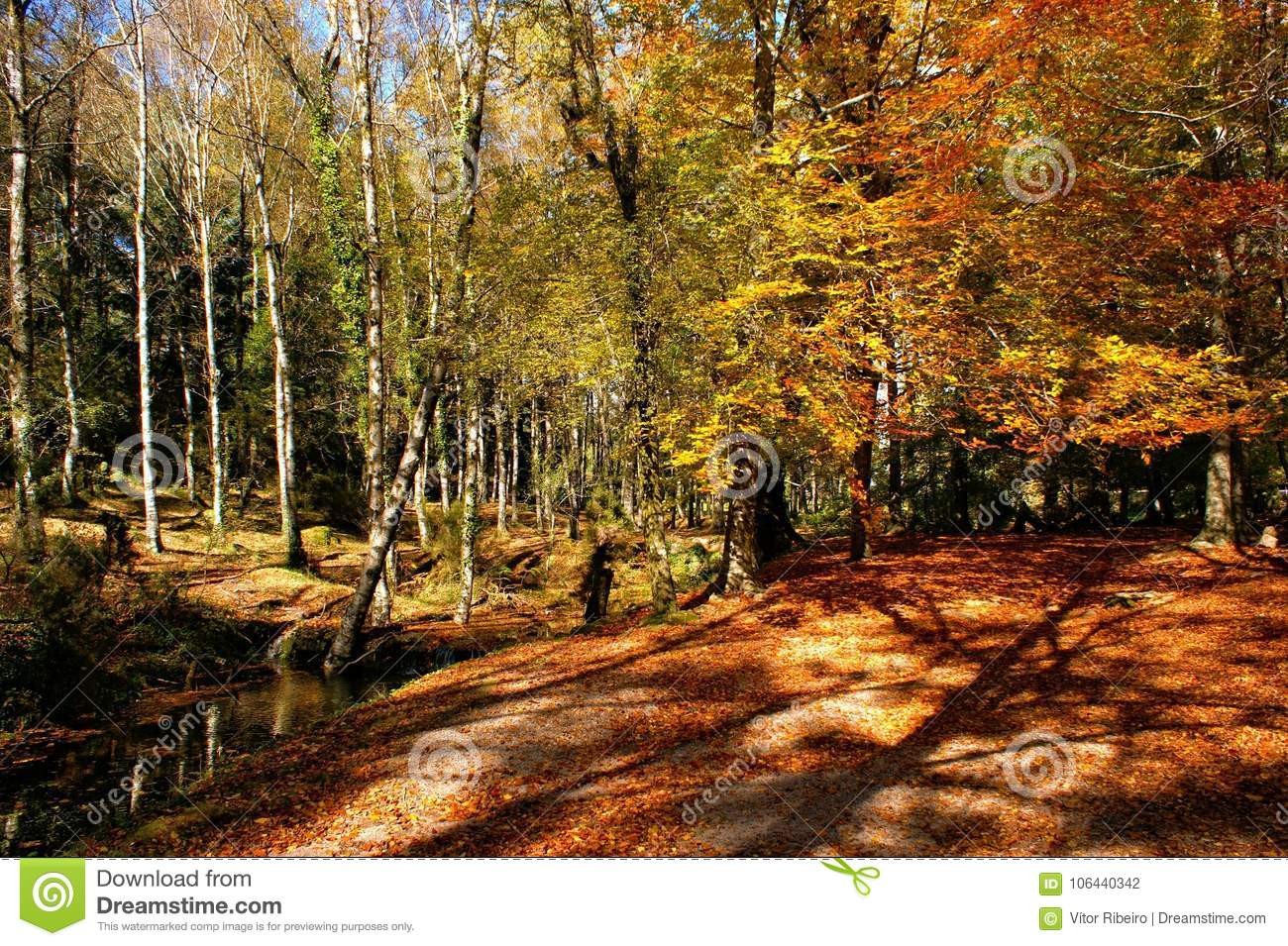 Autumn trees in the National Park of Geres