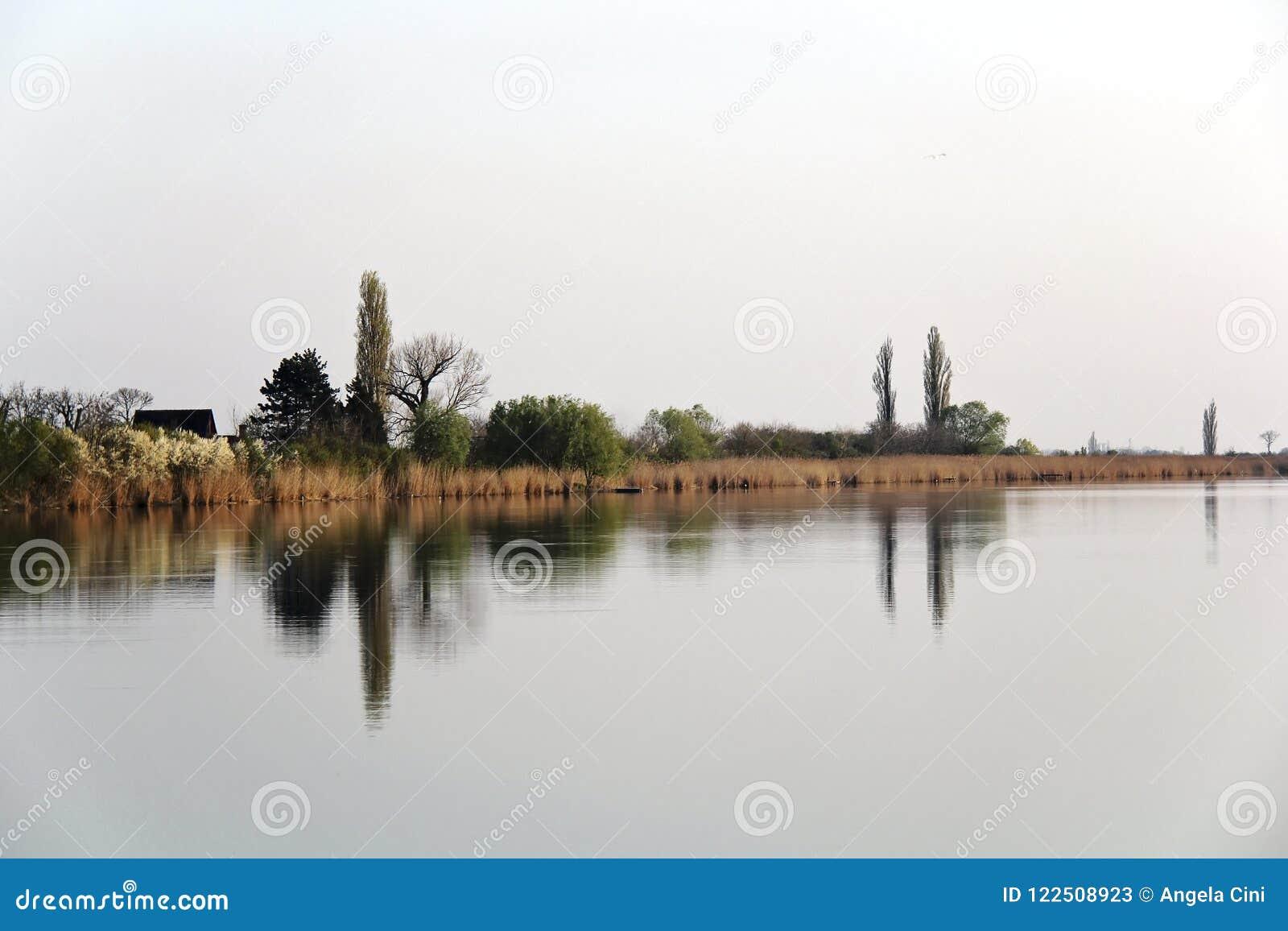 Autumn Trees Reflecting en rivière tranquille