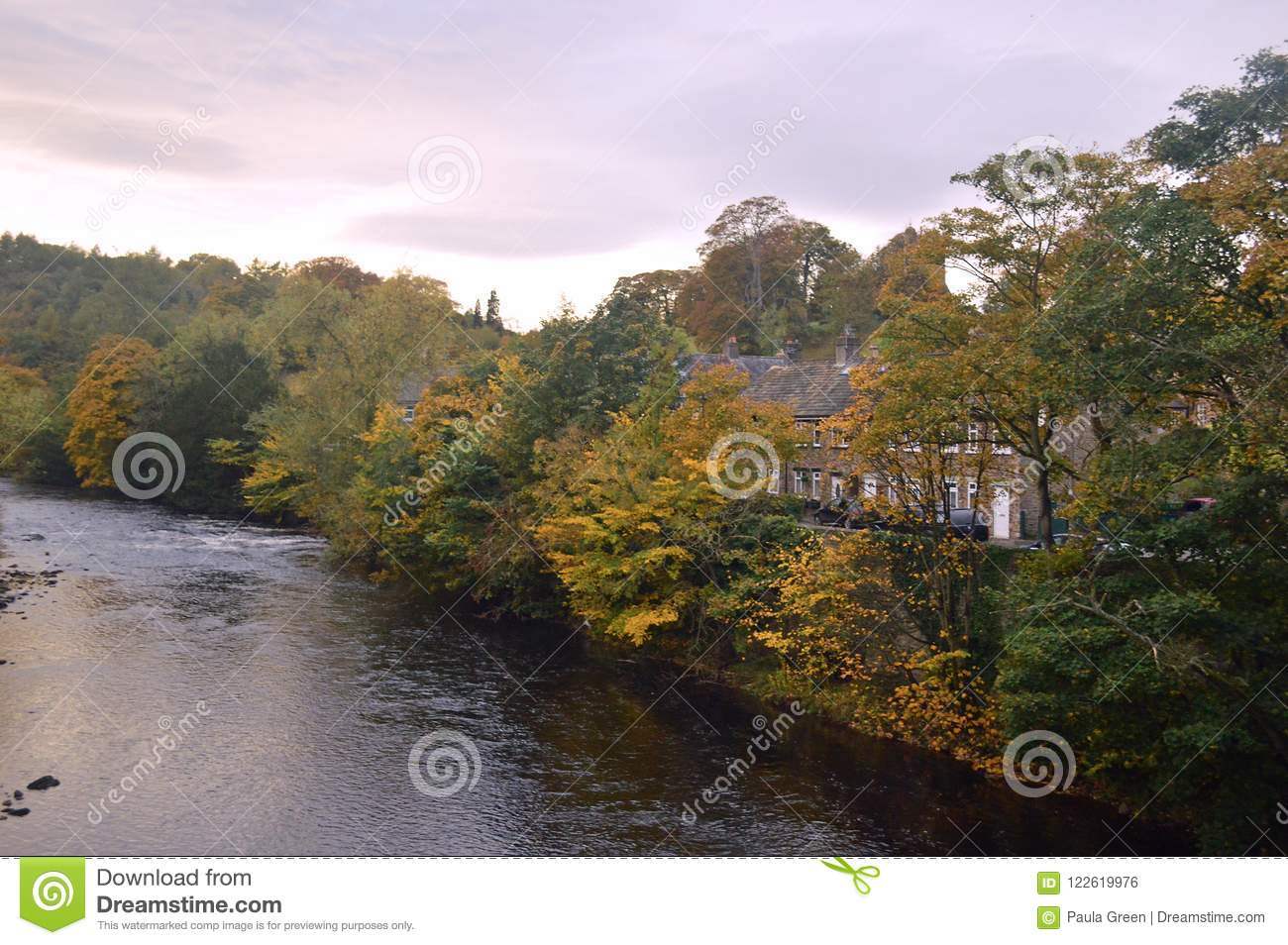 Autumn trees by the river swale