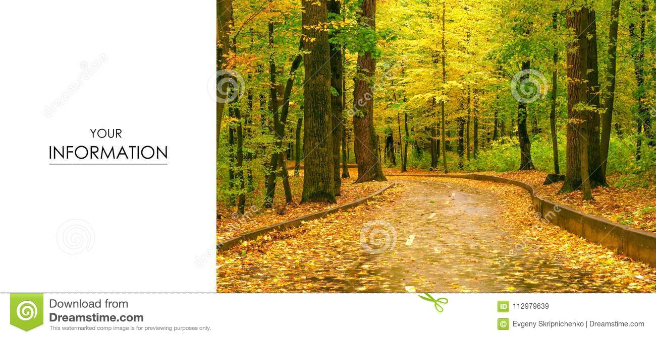 Autumn trees road landscape view of yellow red orange leaves
