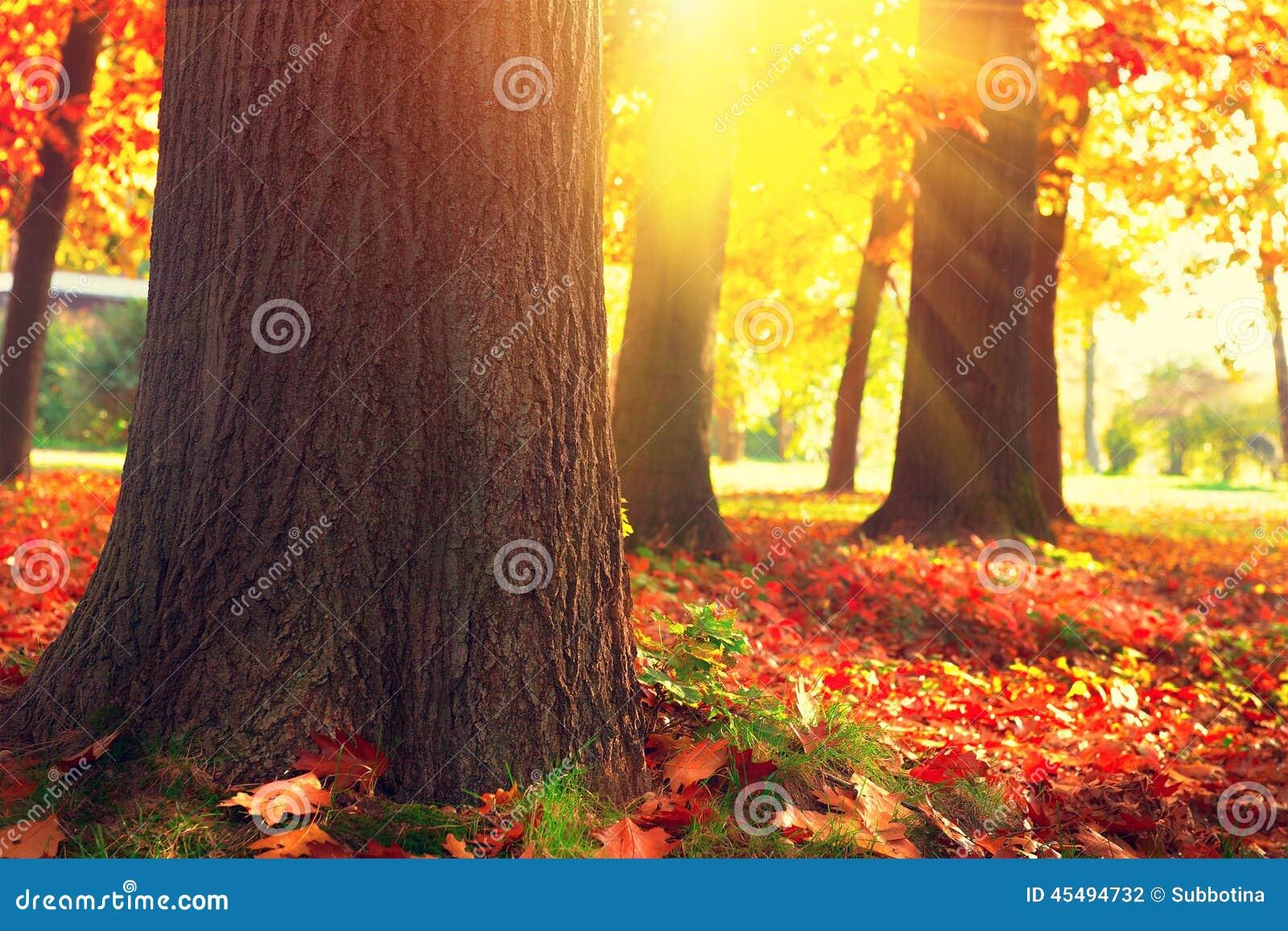 Autumn Trees und Blätter im Sonnenlicht