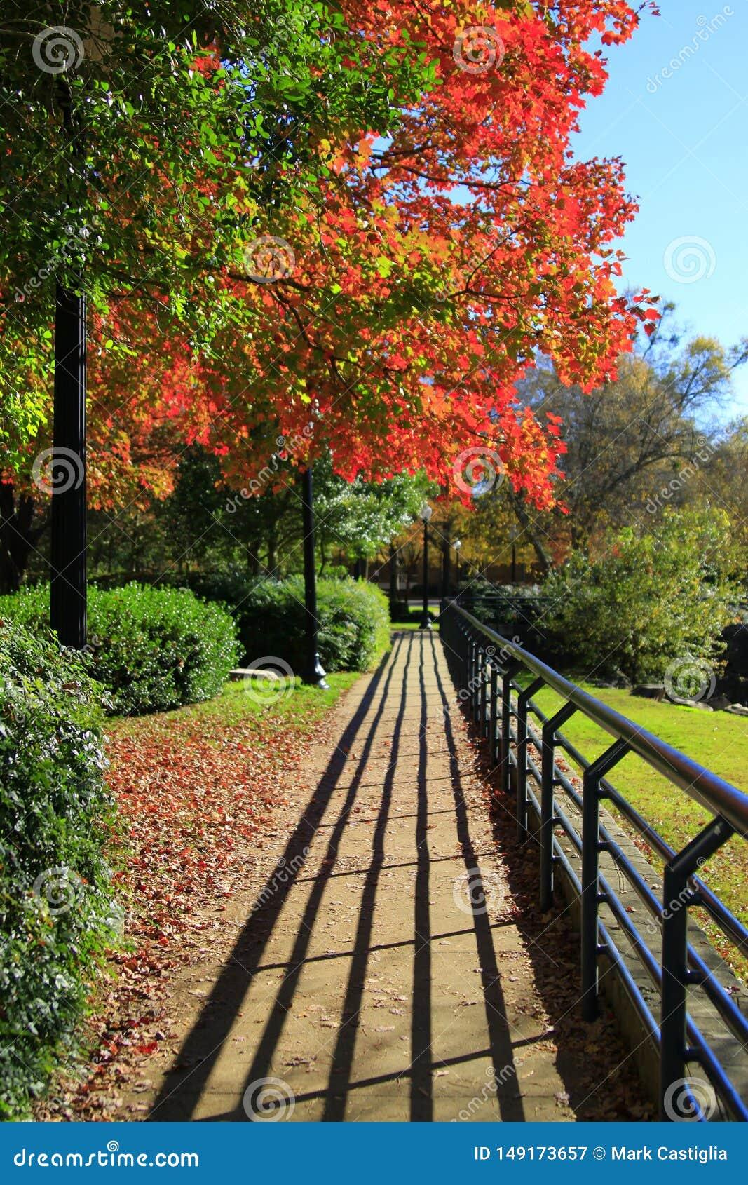 Autumn Walk med distinkta skuggor och briljant nedg?ngl?vverk