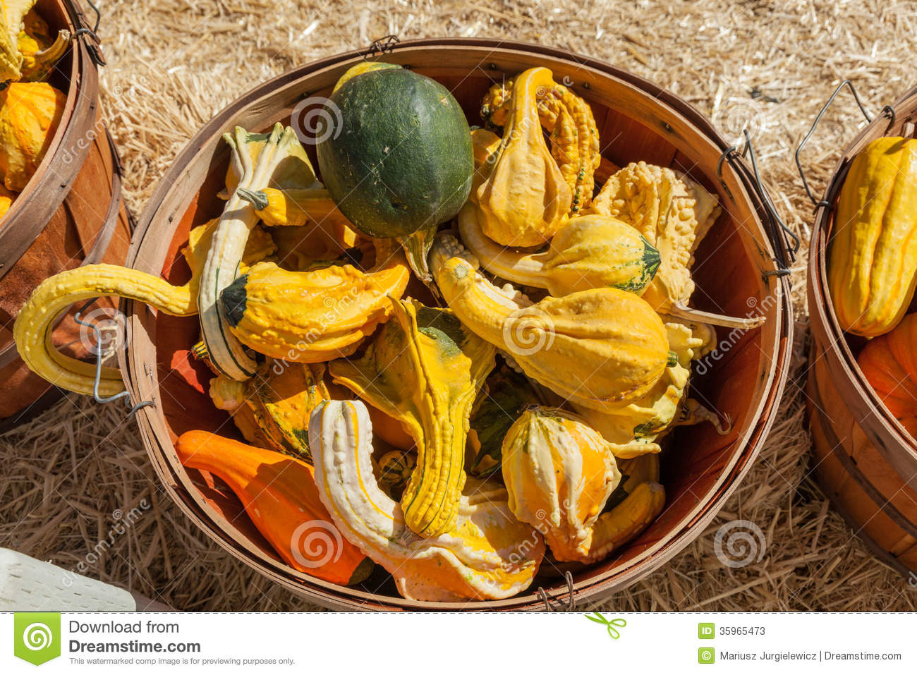 Autumn Wings Gourds