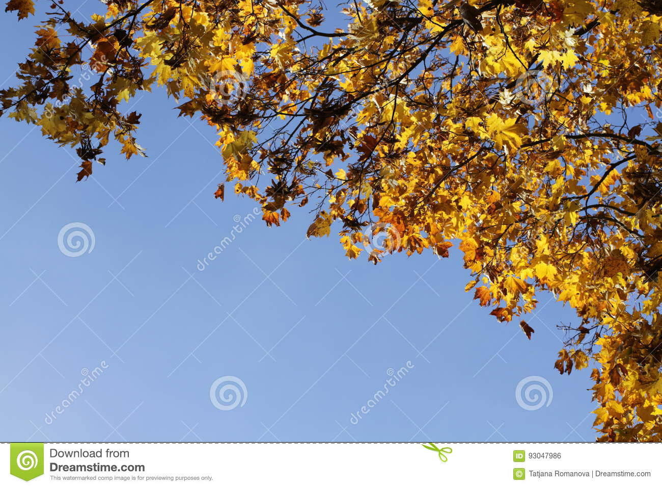 Autumn yellow leafs on blue sky