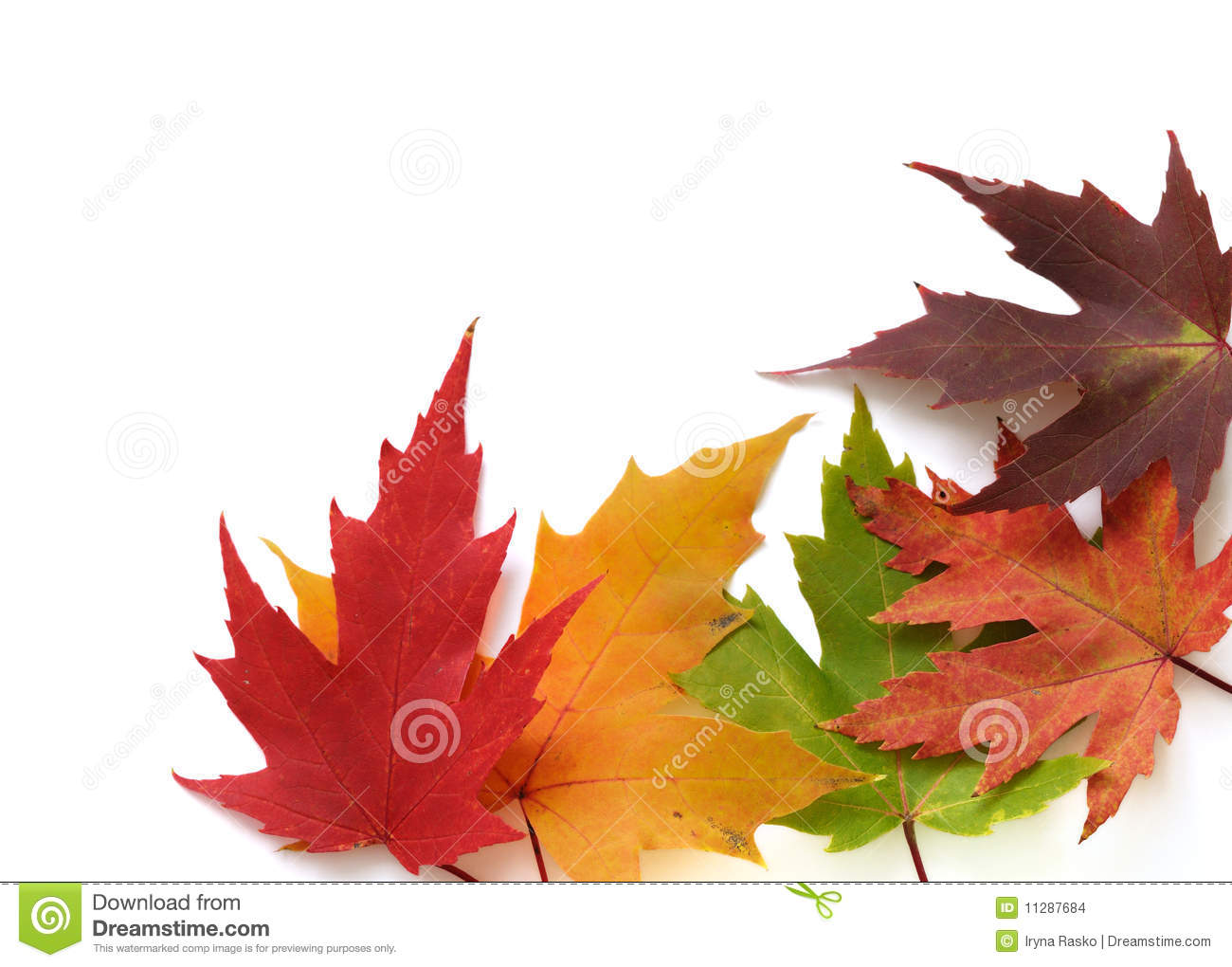 Autumnal frame of colored leaves