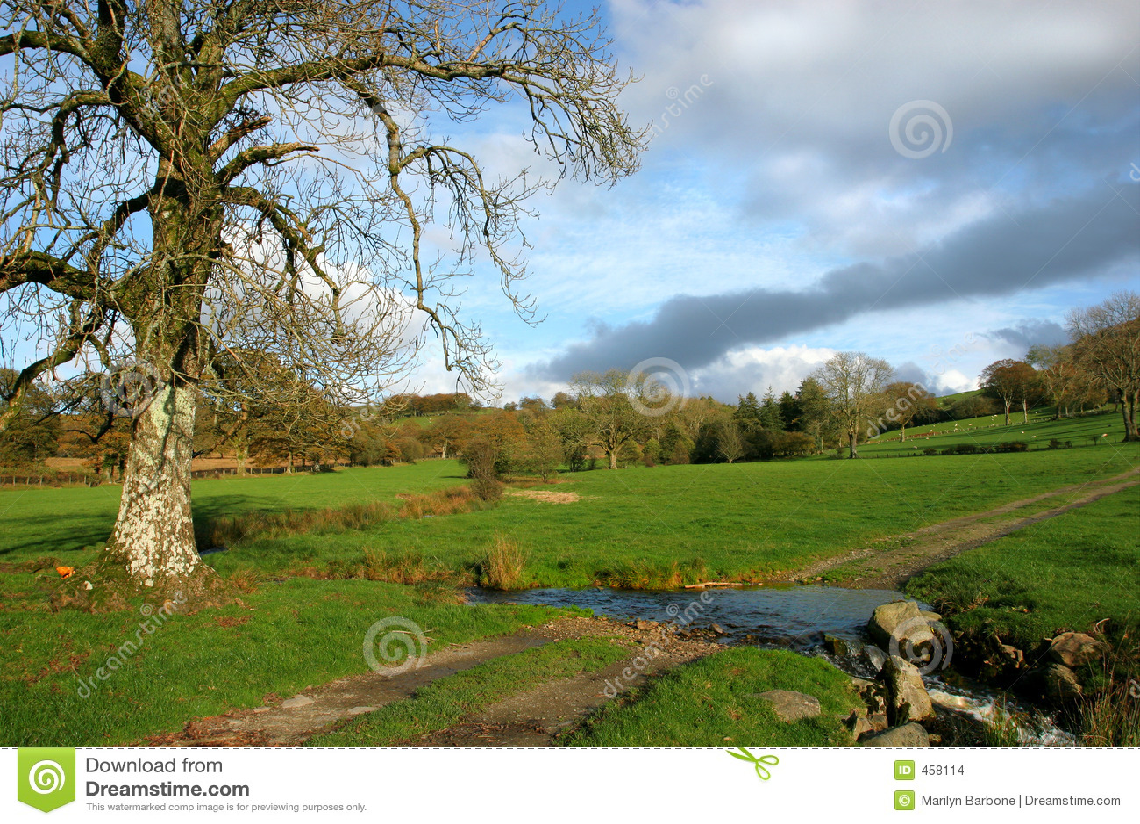 Autumnal Meadows