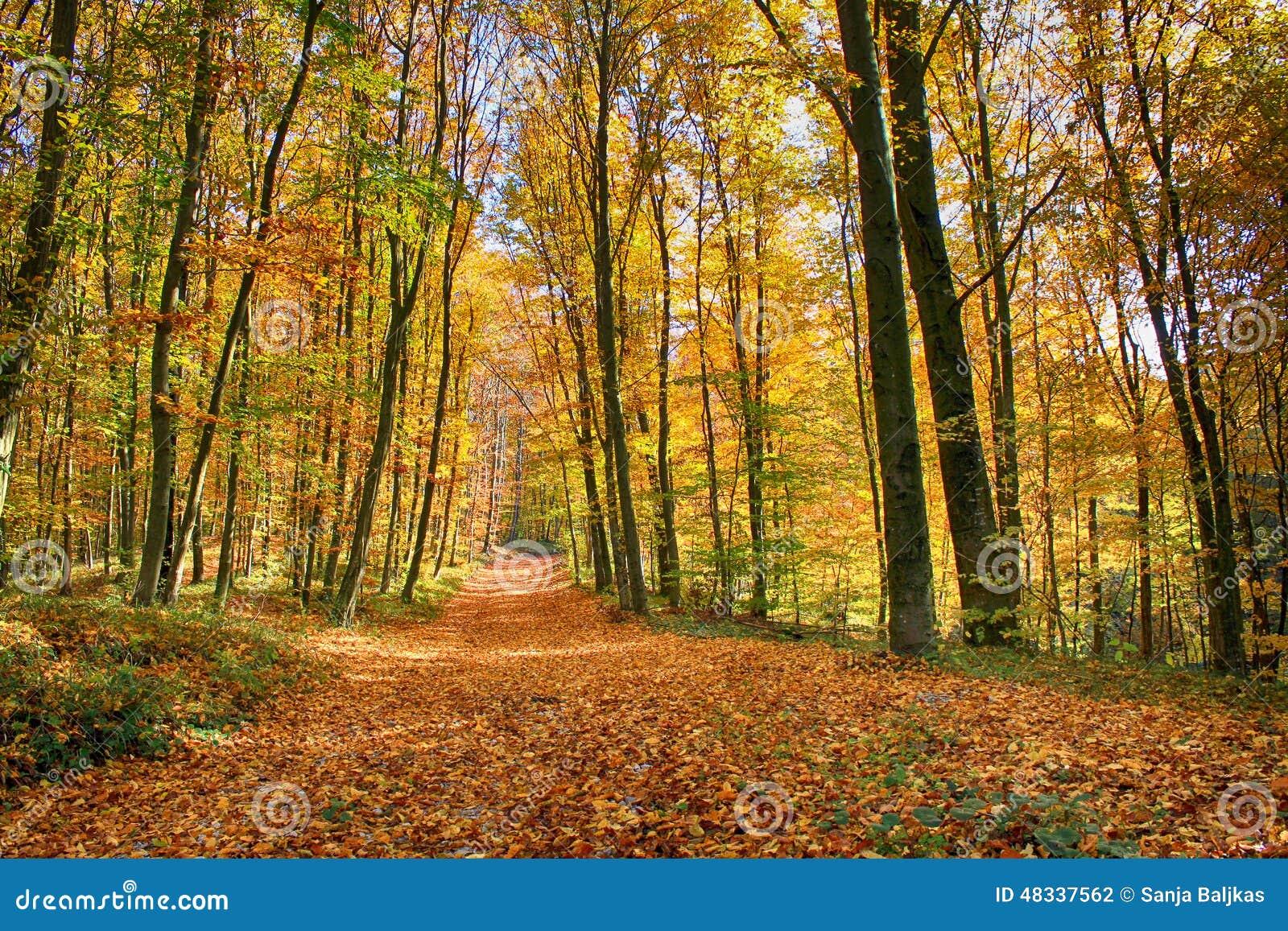 Autumnin het hout