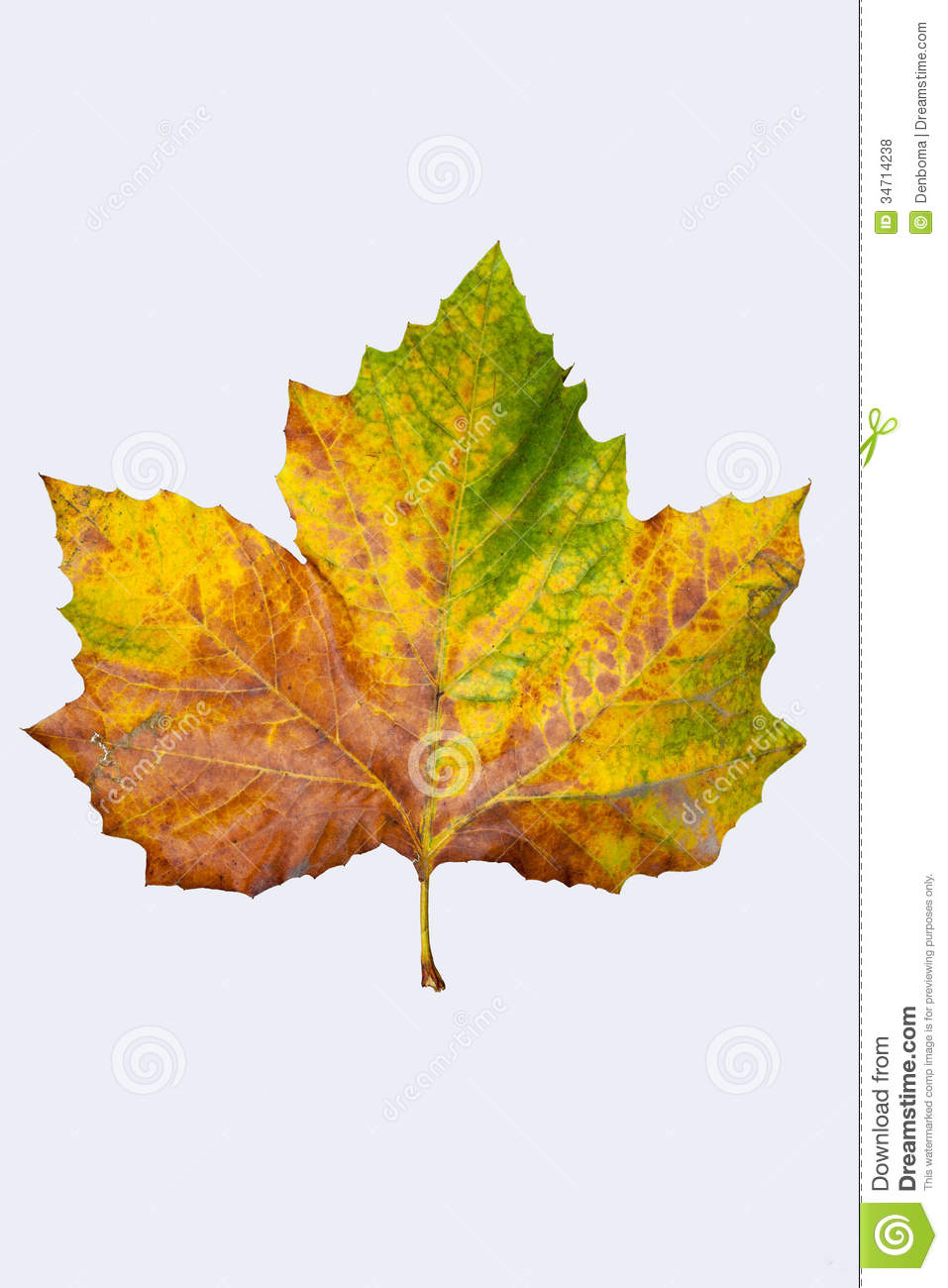 Why do the leaves fall off