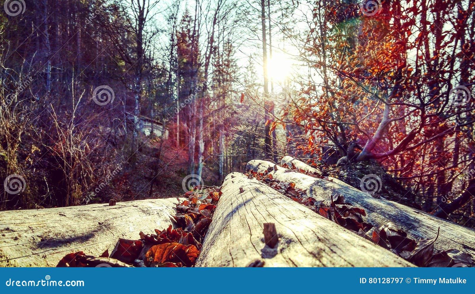 Autumnmagic