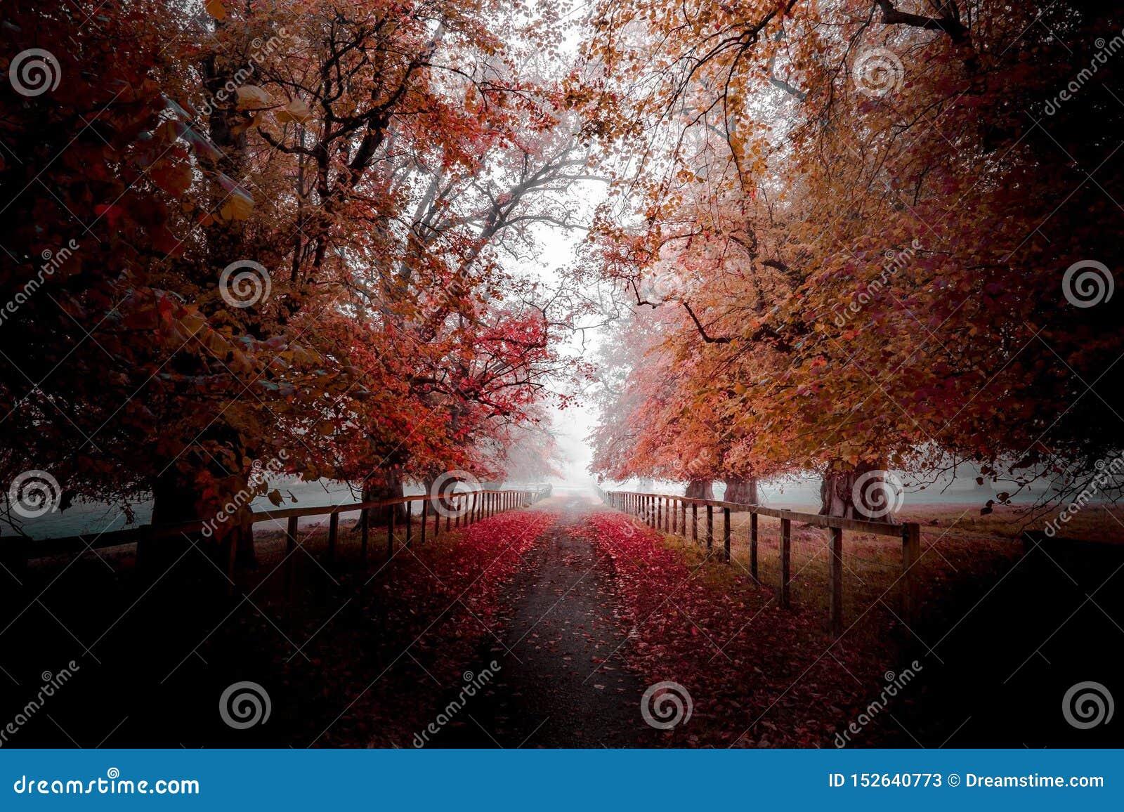 Autunno-albero-autunno-percorso