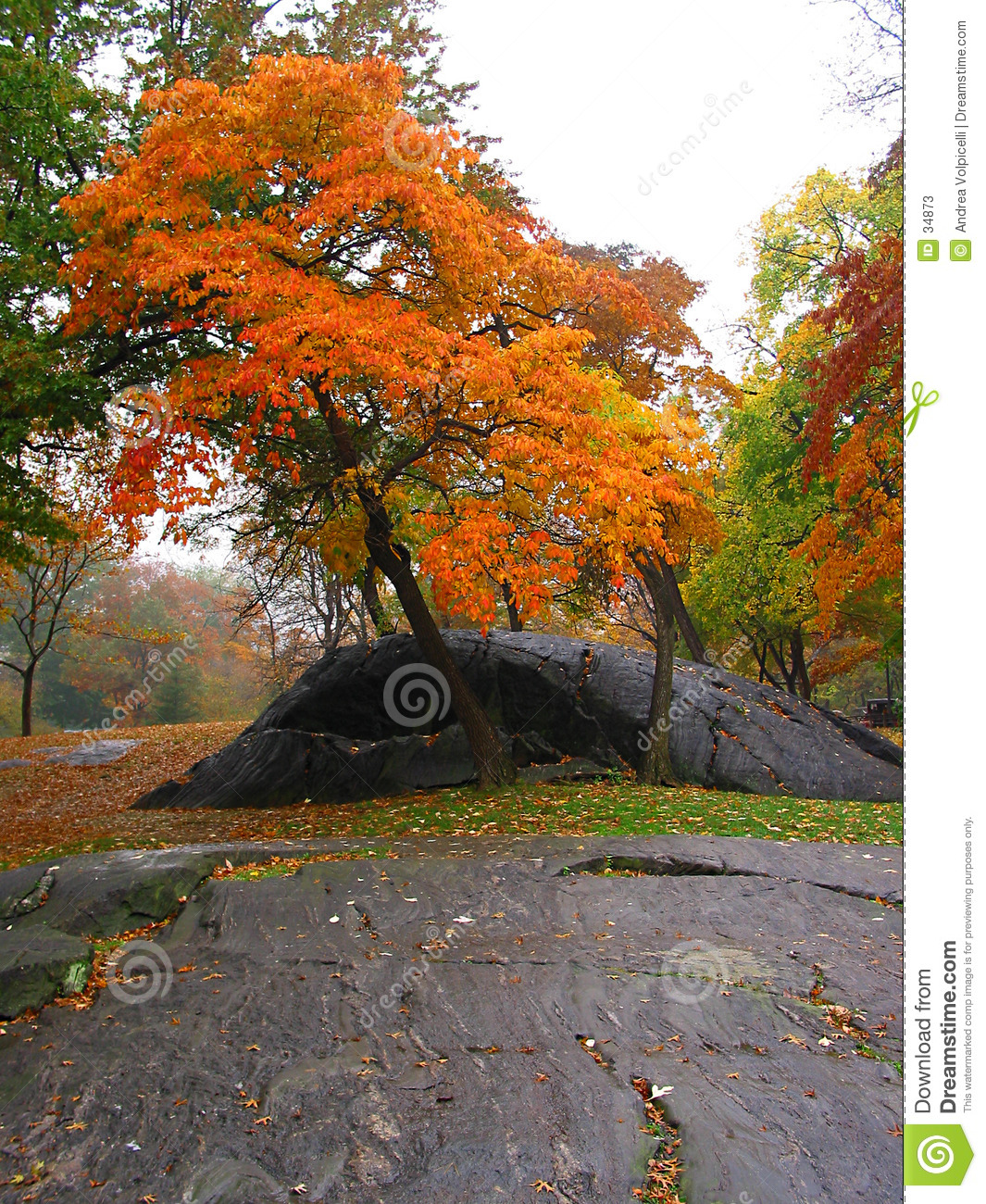 Autunno in Central Park