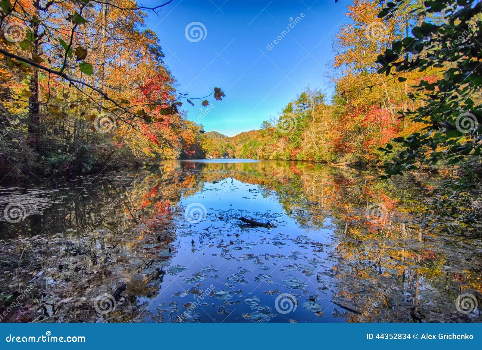 Autunno degli alberi gialli con la riflessione sul lago