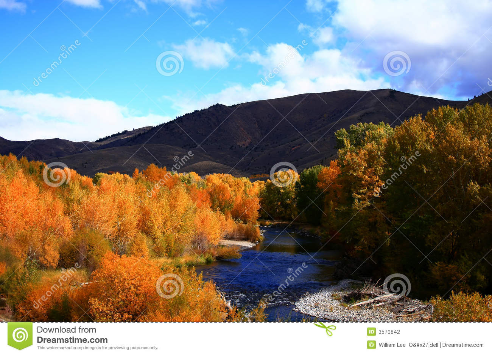 Autunno di legno 4 del fiume